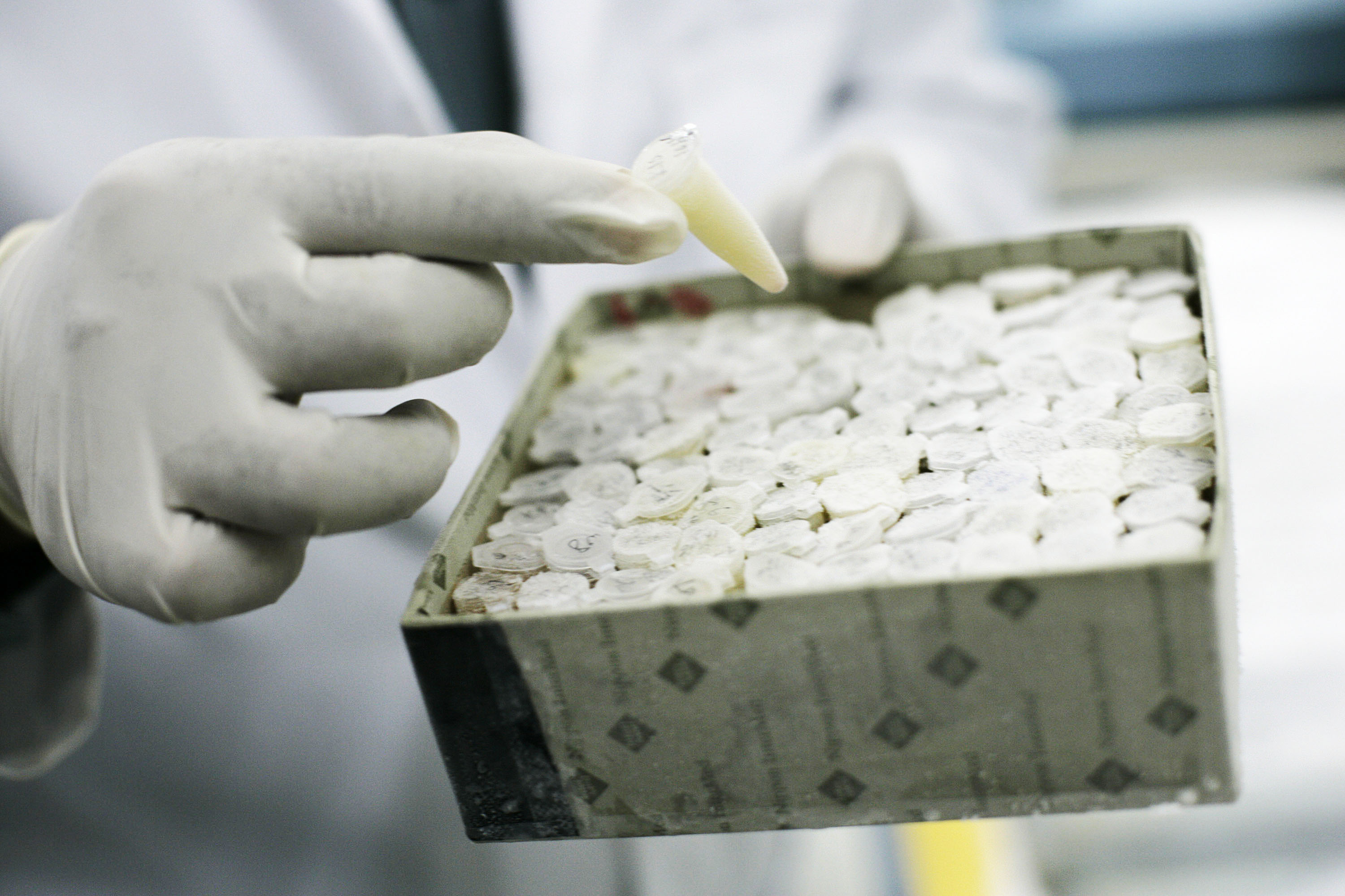Biologists are trying to make bird flu easier to spread. Can we not?