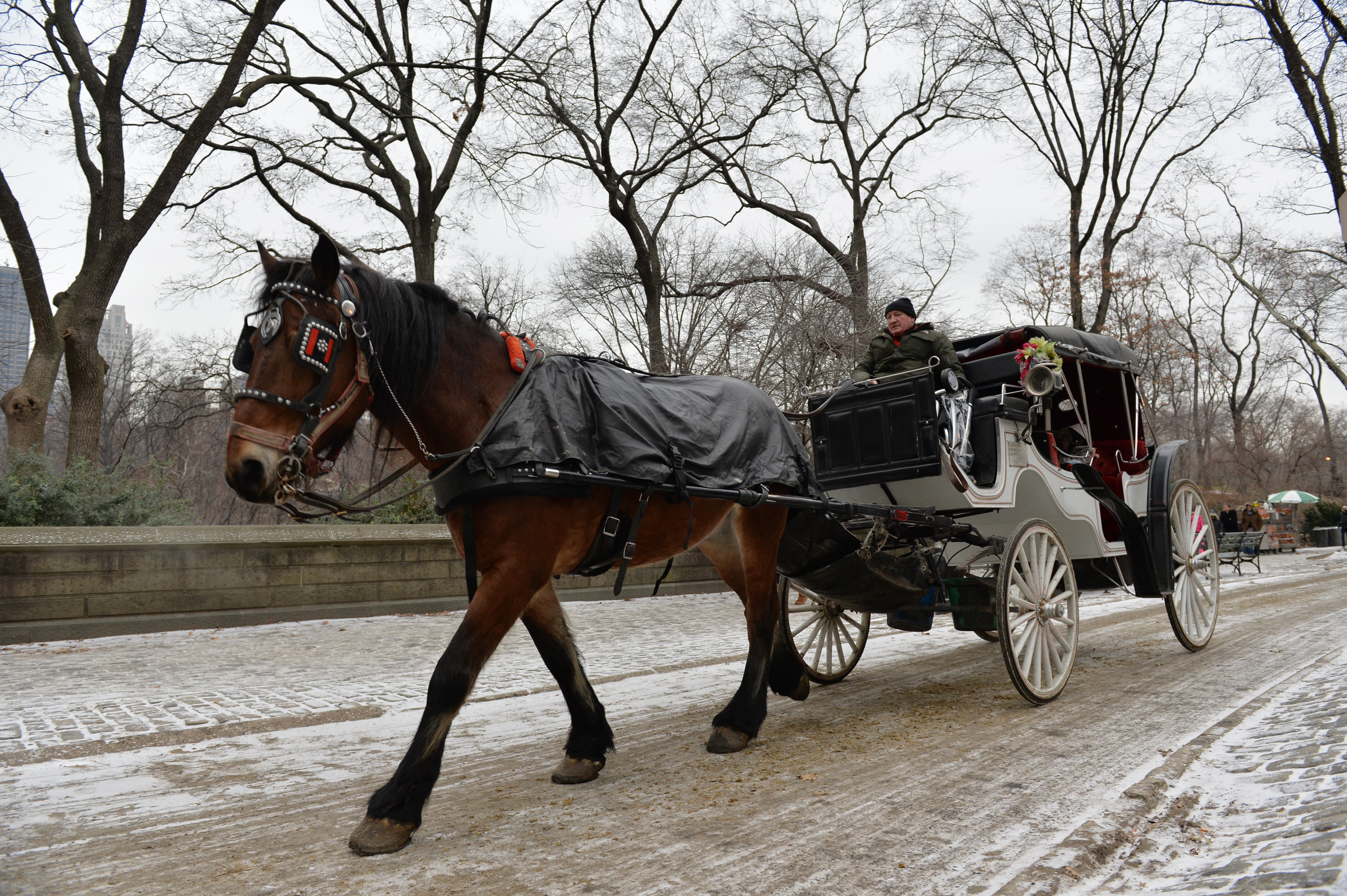 NYC carriage drivers must move into Central Park, judge rules