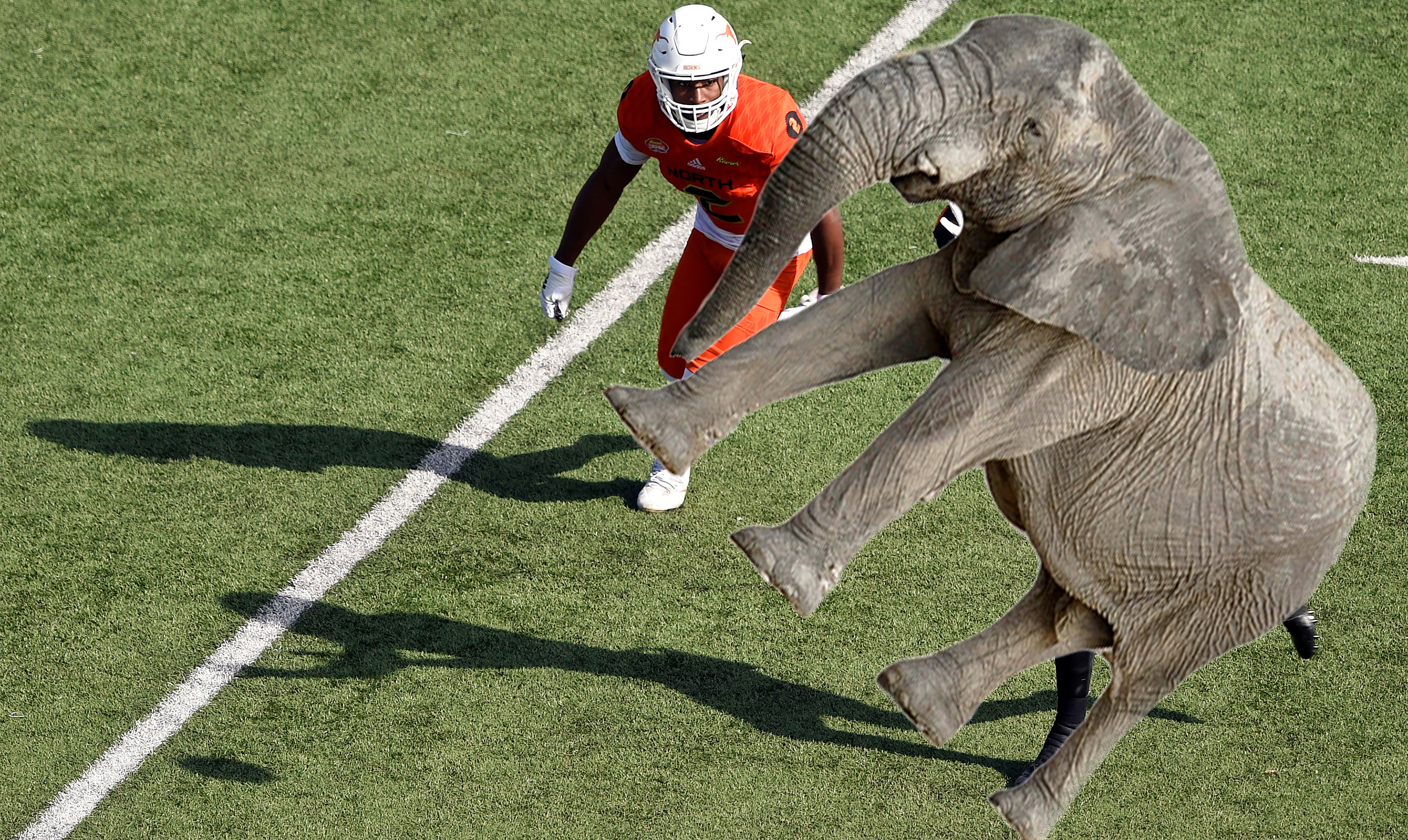 'I can't press an elephant.' NFL DB prospects on which animal would be hardest to cover