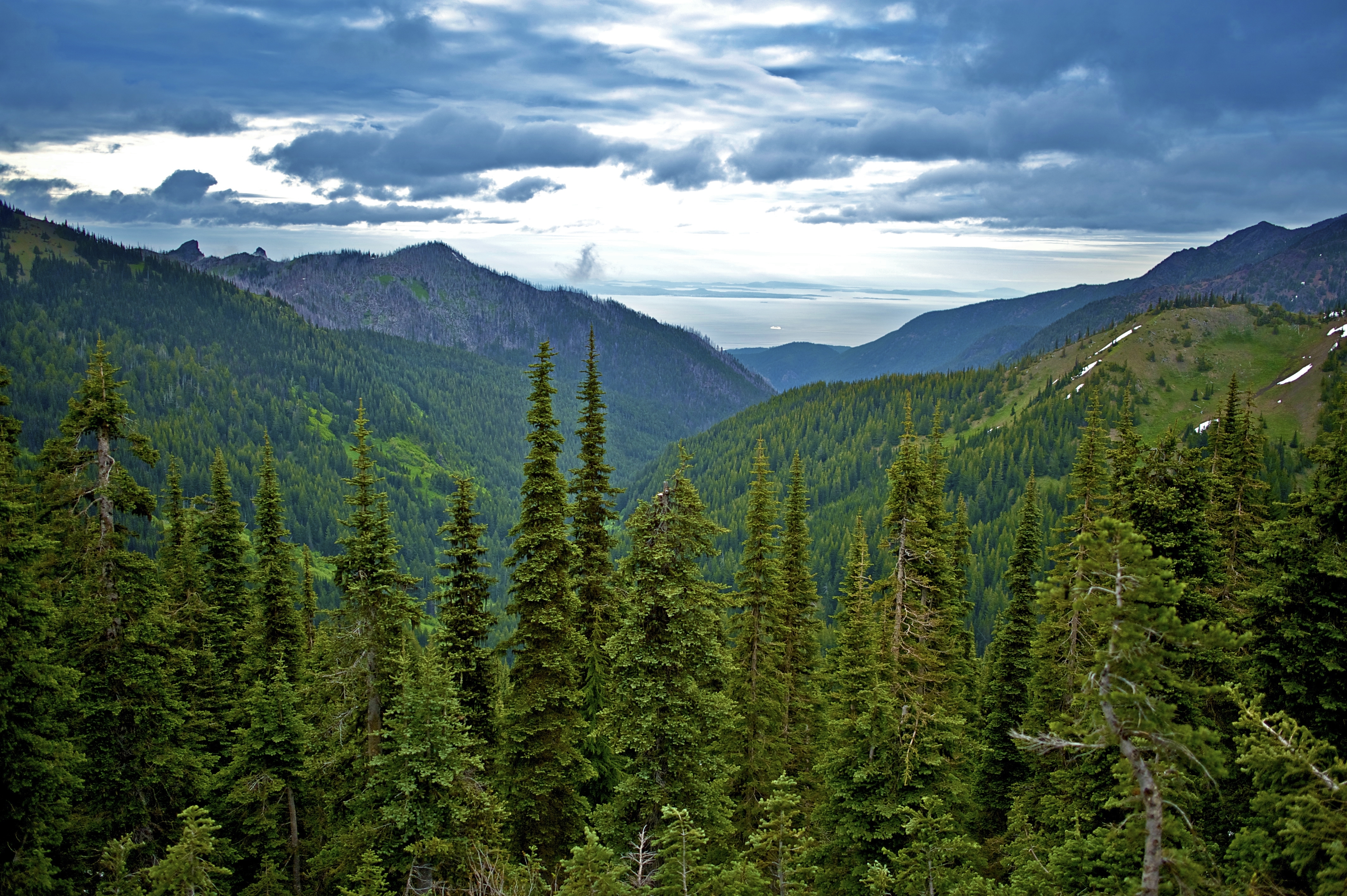 6 Olympic National Forest hikes for all seasons - Curbed Seattle