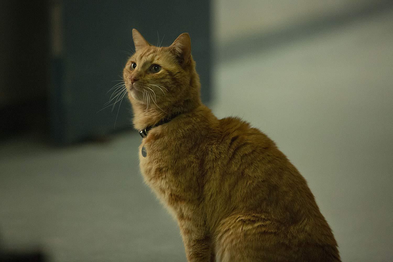 Captain Marvel: Carol Danvers's cat Goose and Flerkens, explained