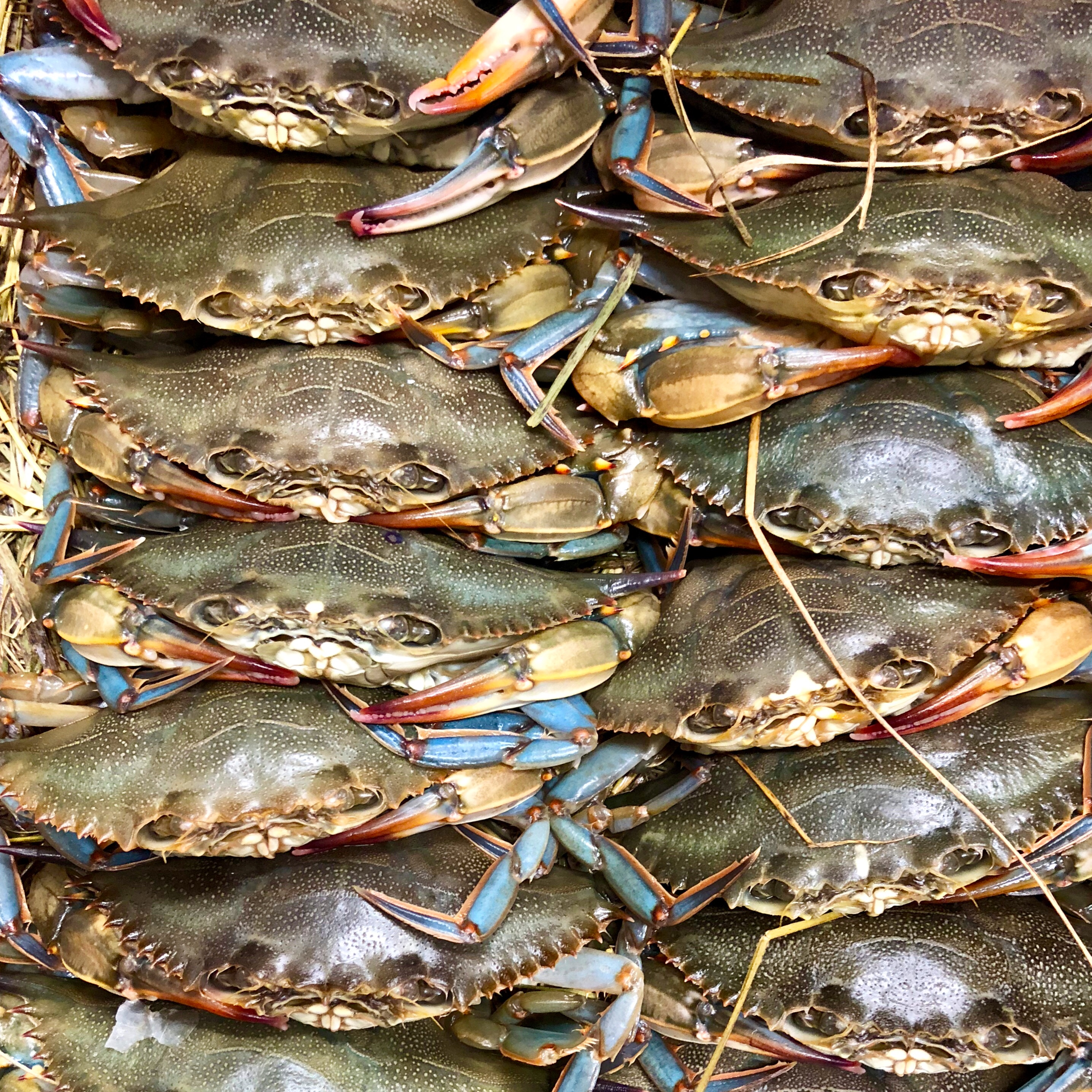 Soft Shell Crabs Spotted In Savannah at the Grey Market