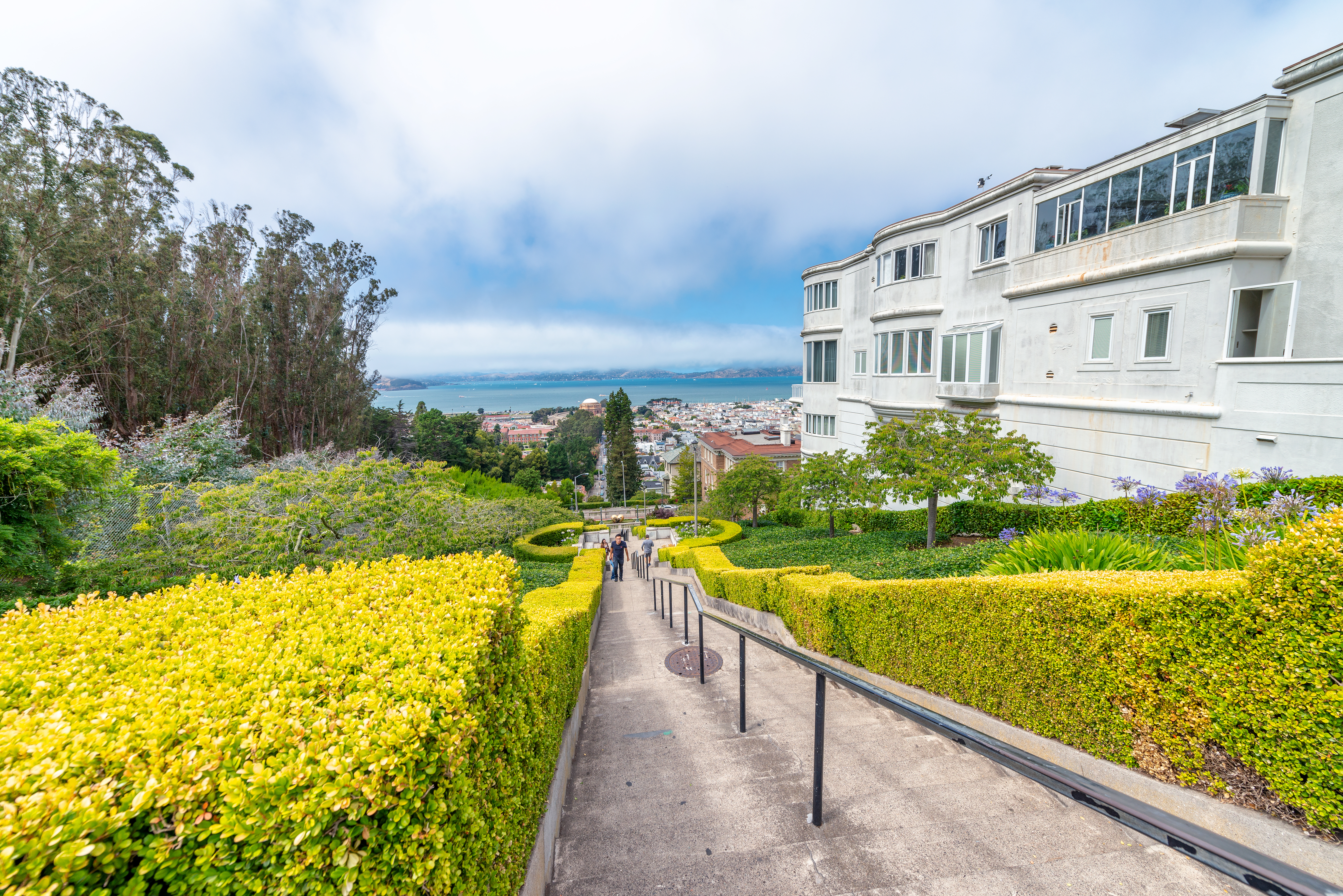 Concrete steps that drop down, bounded by yellow flowers on the left and mega mansions on the right.