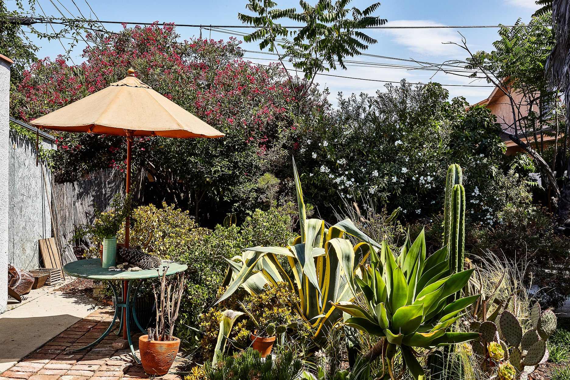 An outdoor seating area with a table that has a peach colored umbrella. There are various plants and cacti in the yard.