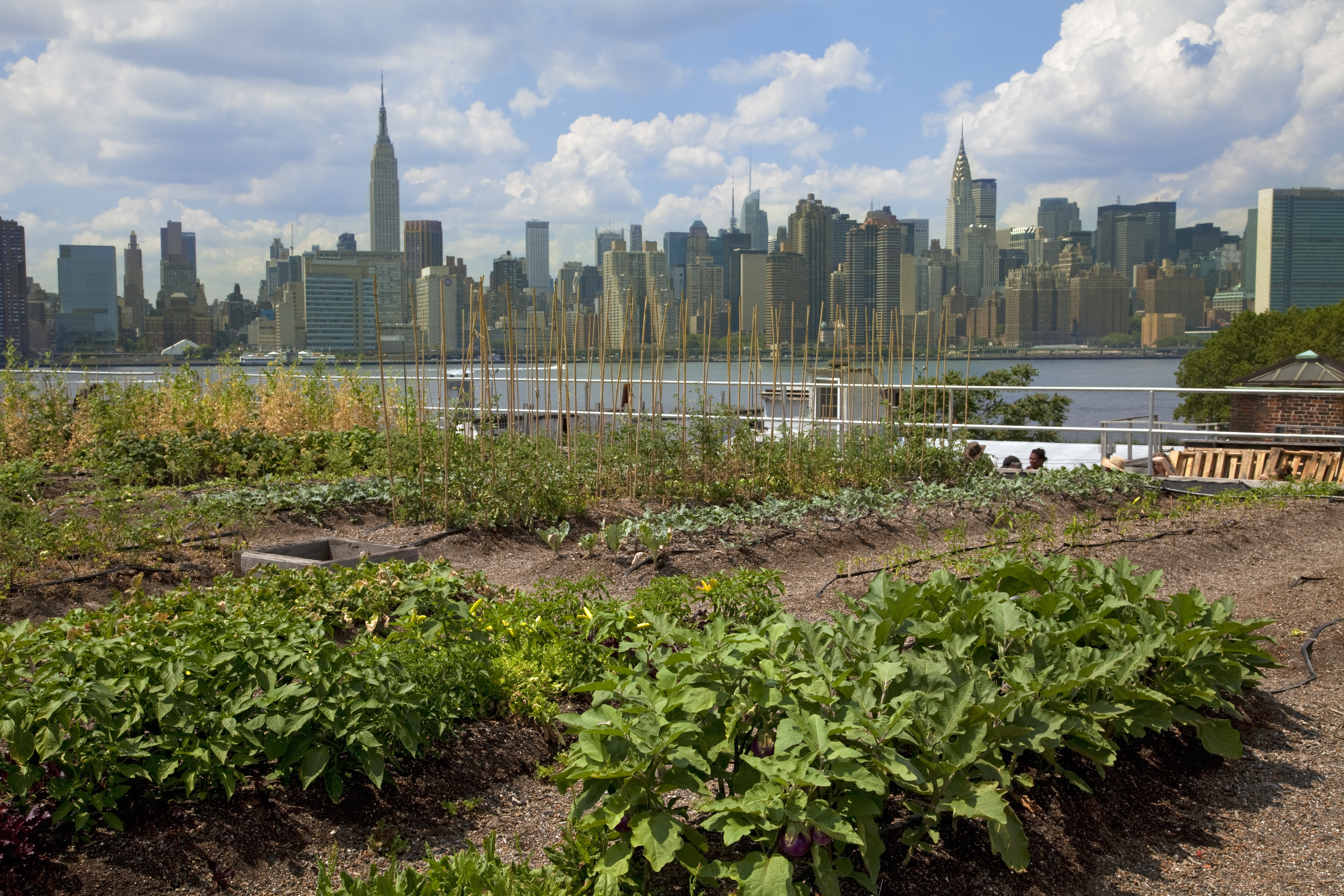 New York City's best urban farms: Brooklyn Grange and more - Curbed NY