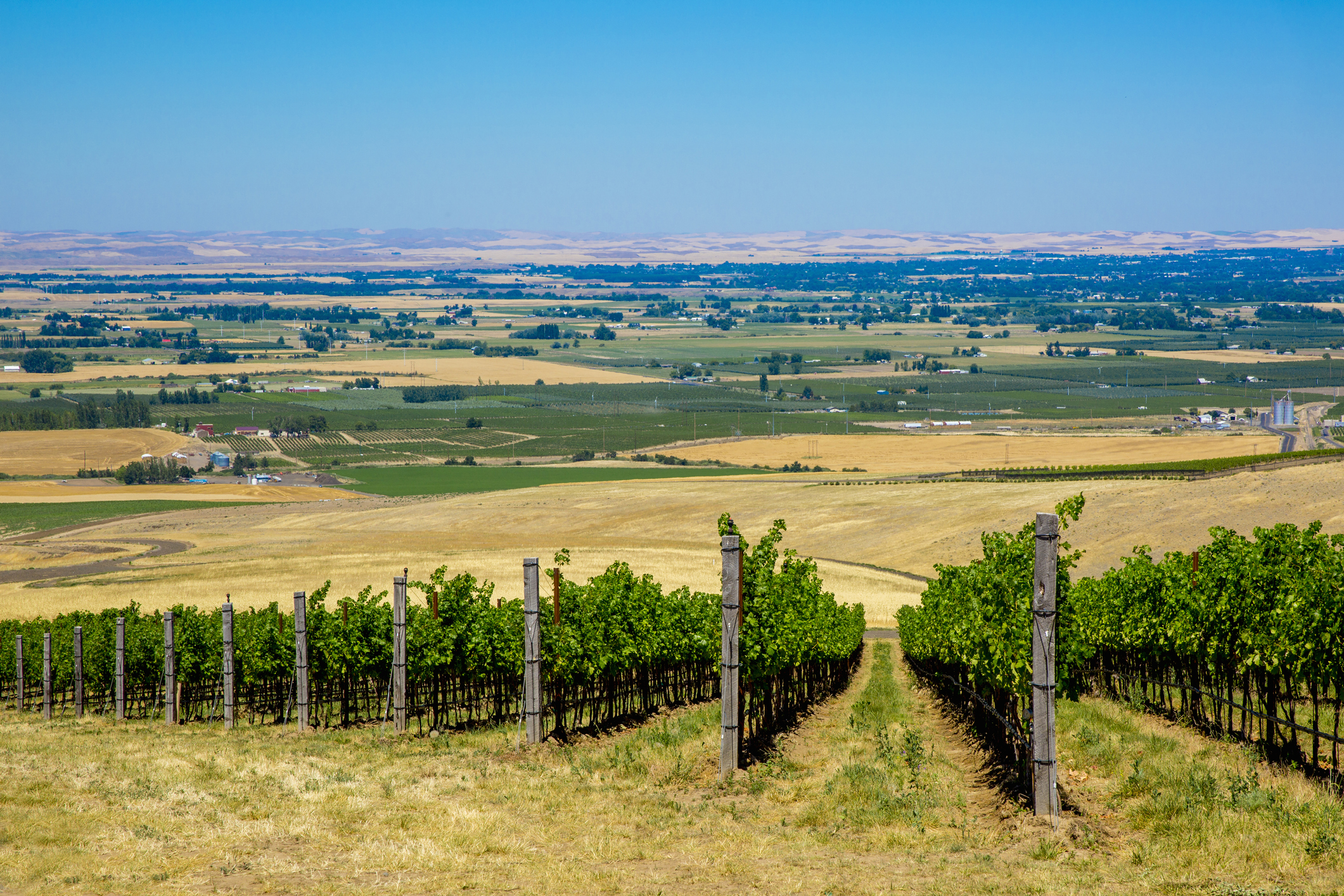 8 Great Places to Drink Wine in Walla Walla