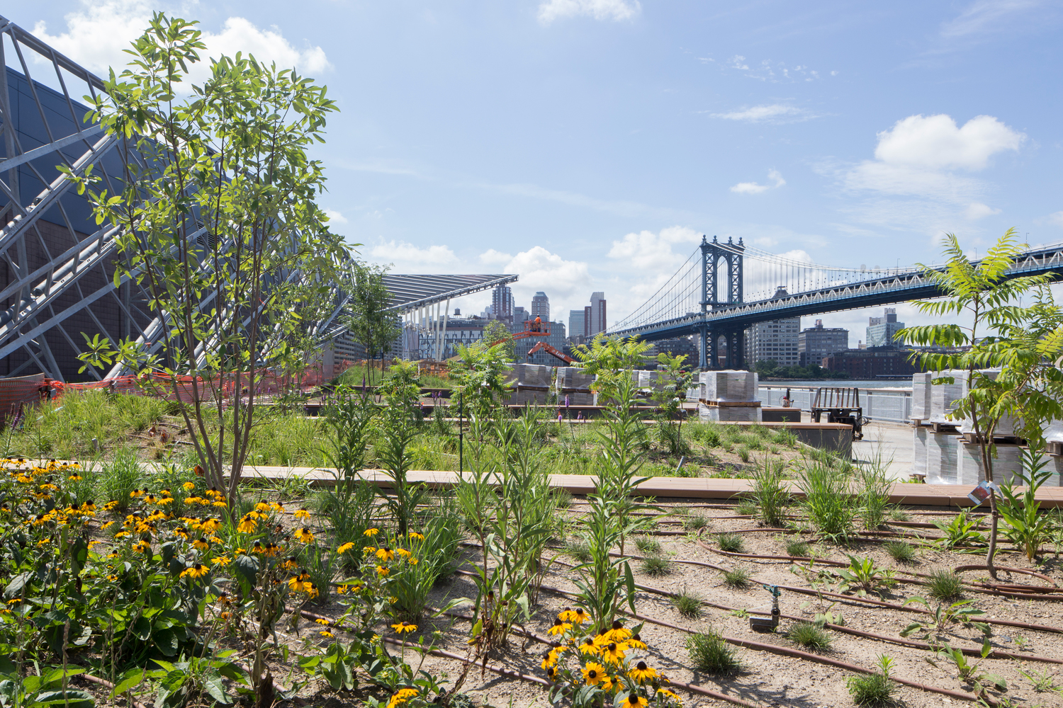 Long-awaited Pier 35 park on the Lower East Side finally debuts