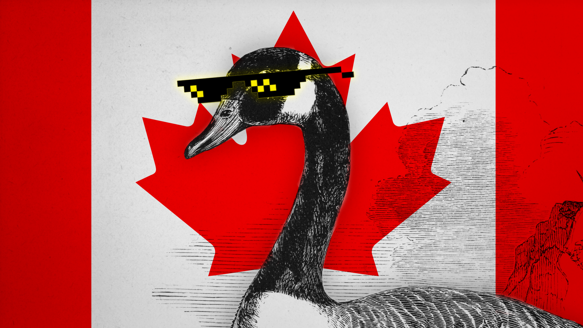 The Canada goose is unstoppable.