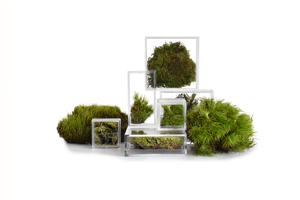 Need a little green in your life? These micro terrariums can help