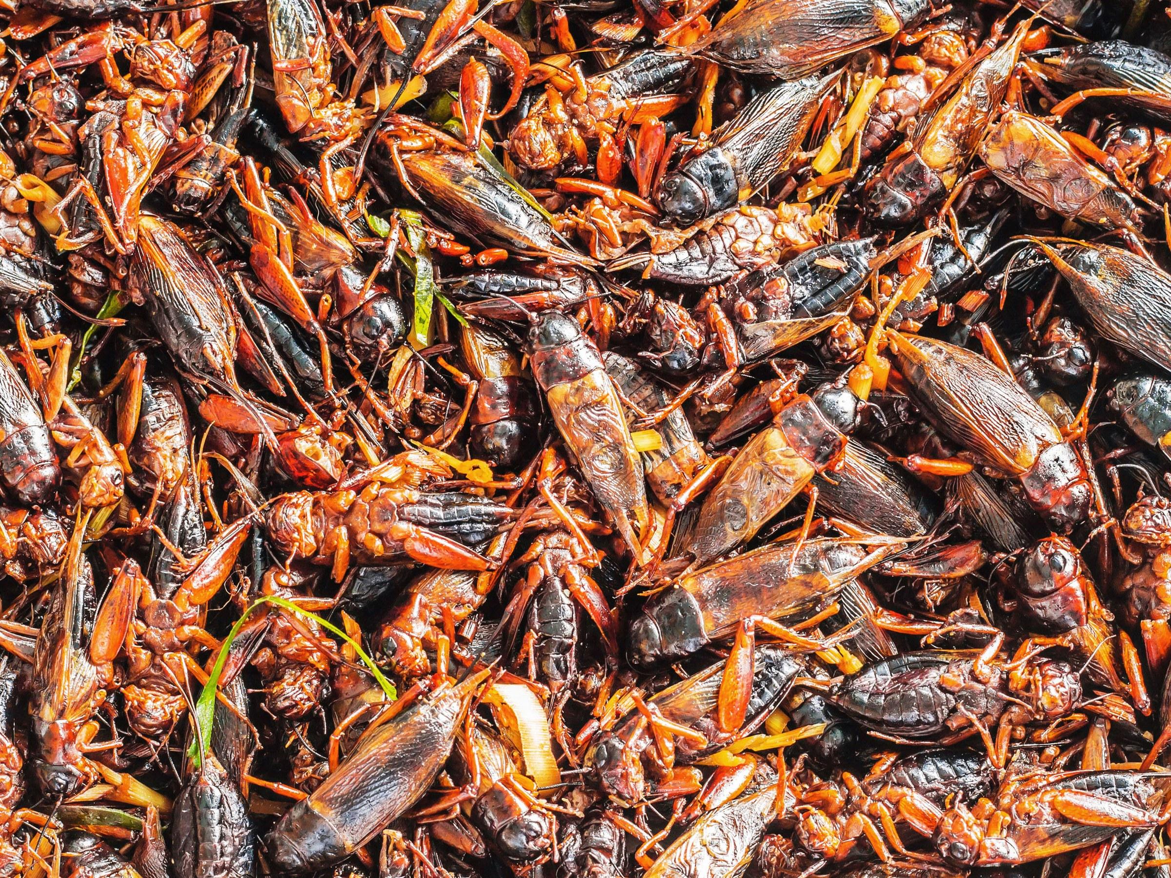 Abokado adds crickets to its food menu in London