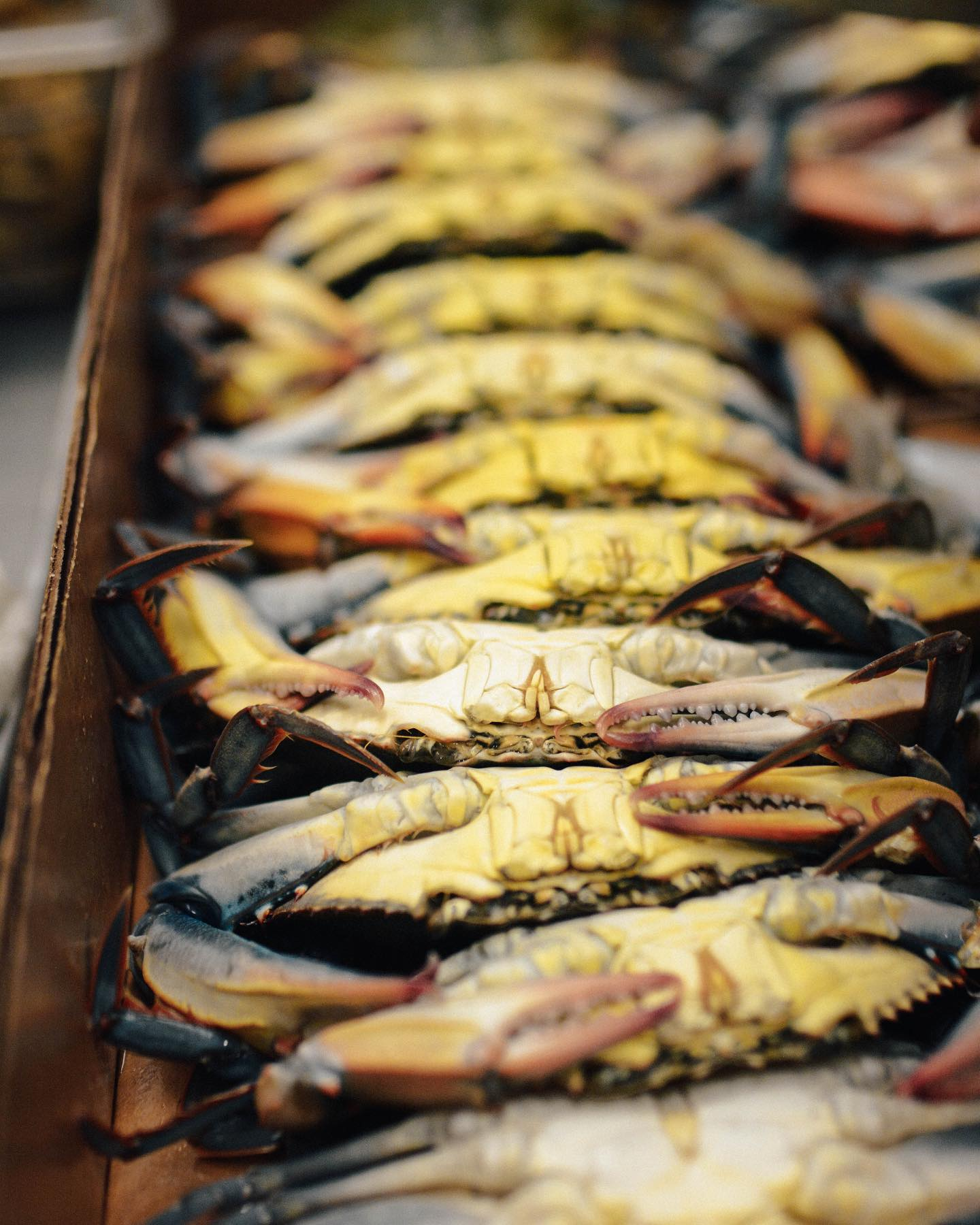 A row of uncooked soft shell crabs line a cardboard box