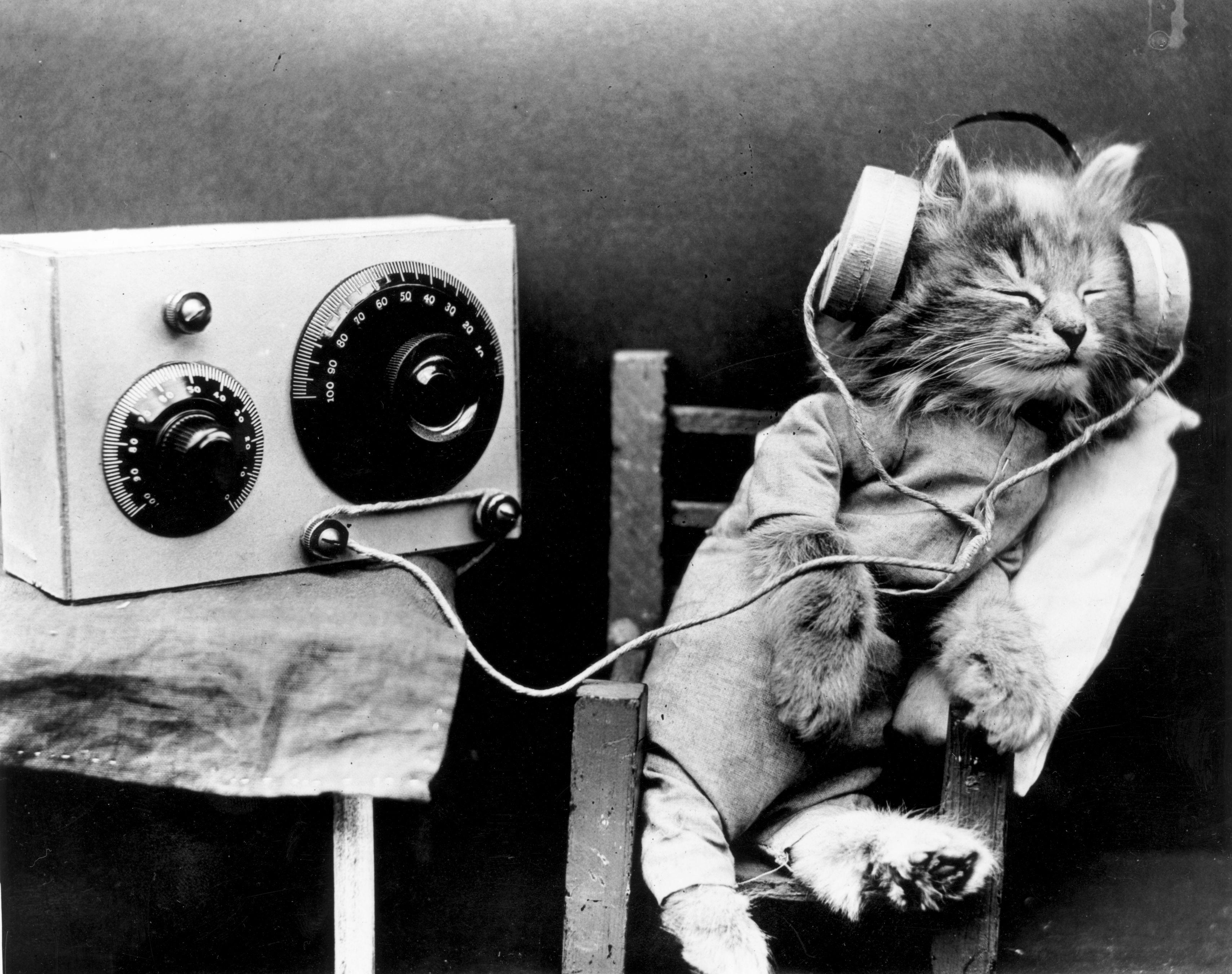 Radio Cat