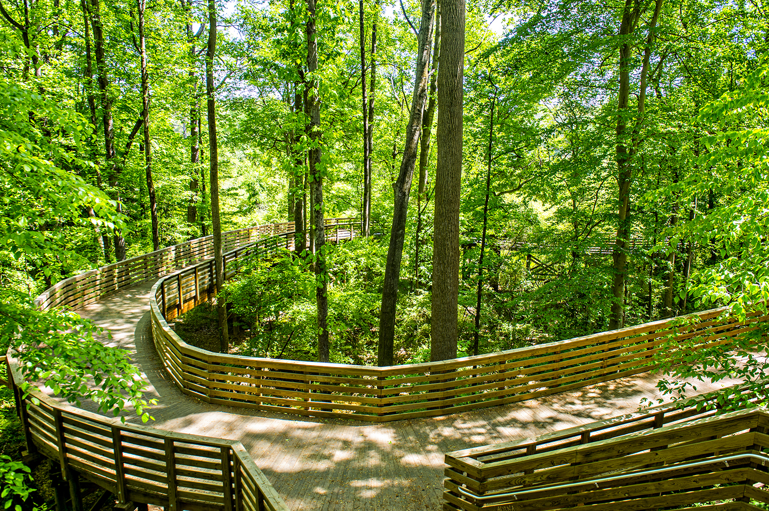 A section of the trail in the treetops.