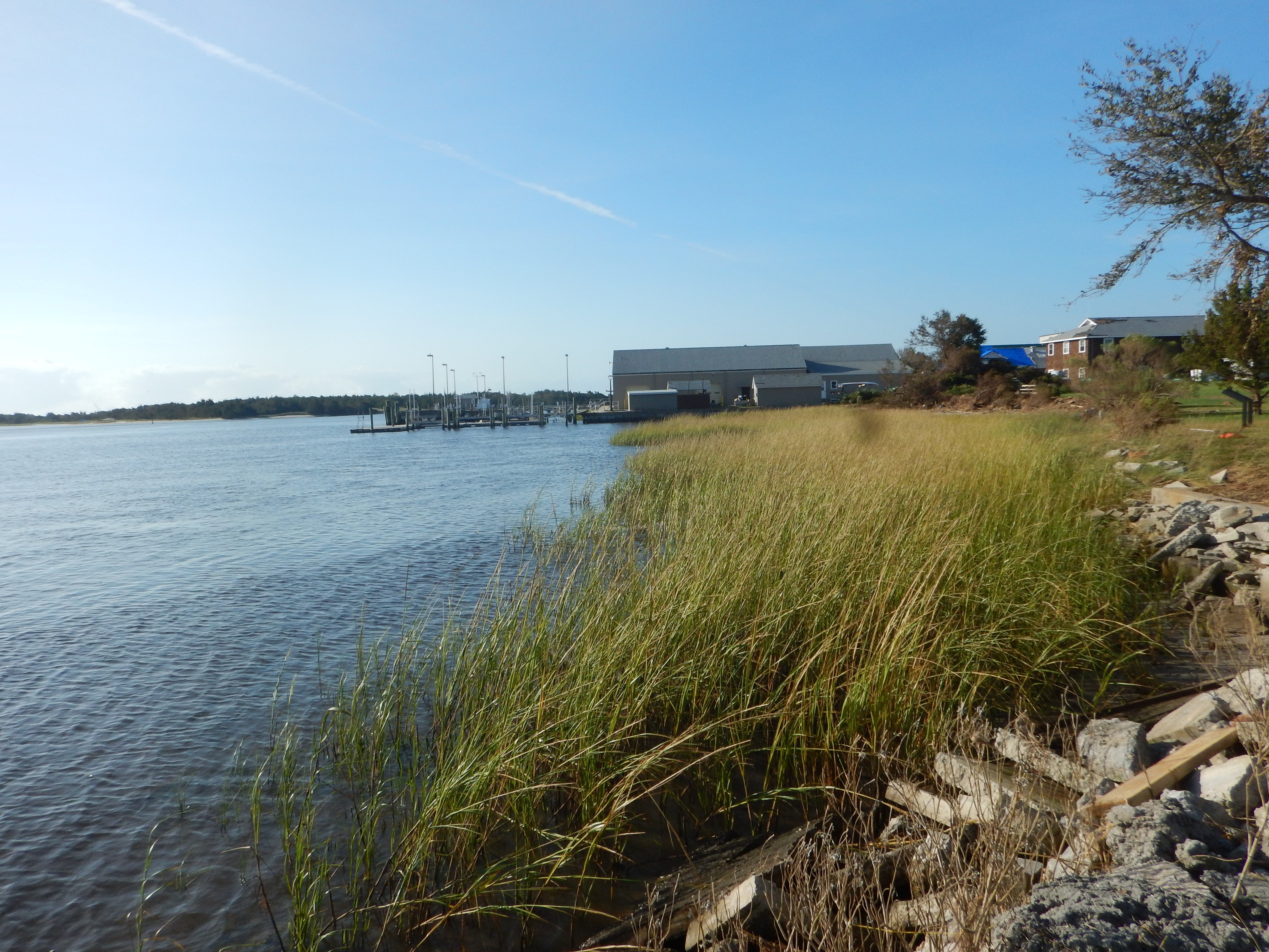 Why you want oysters and a salt marsh between you and a hurricane