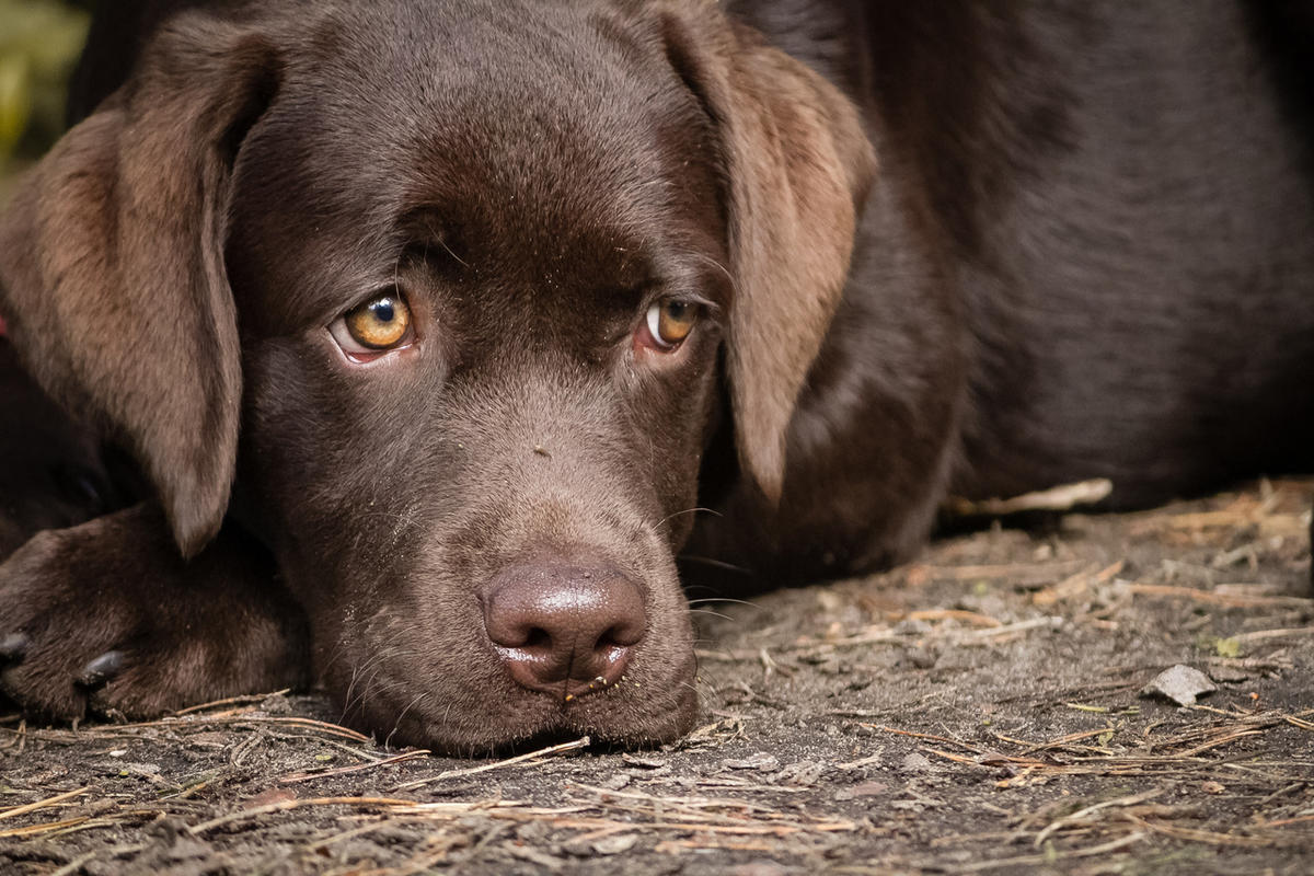 Utah is one of 12 states in which people have recently taken ill from a bacterial infection that has been traced back to puppies.