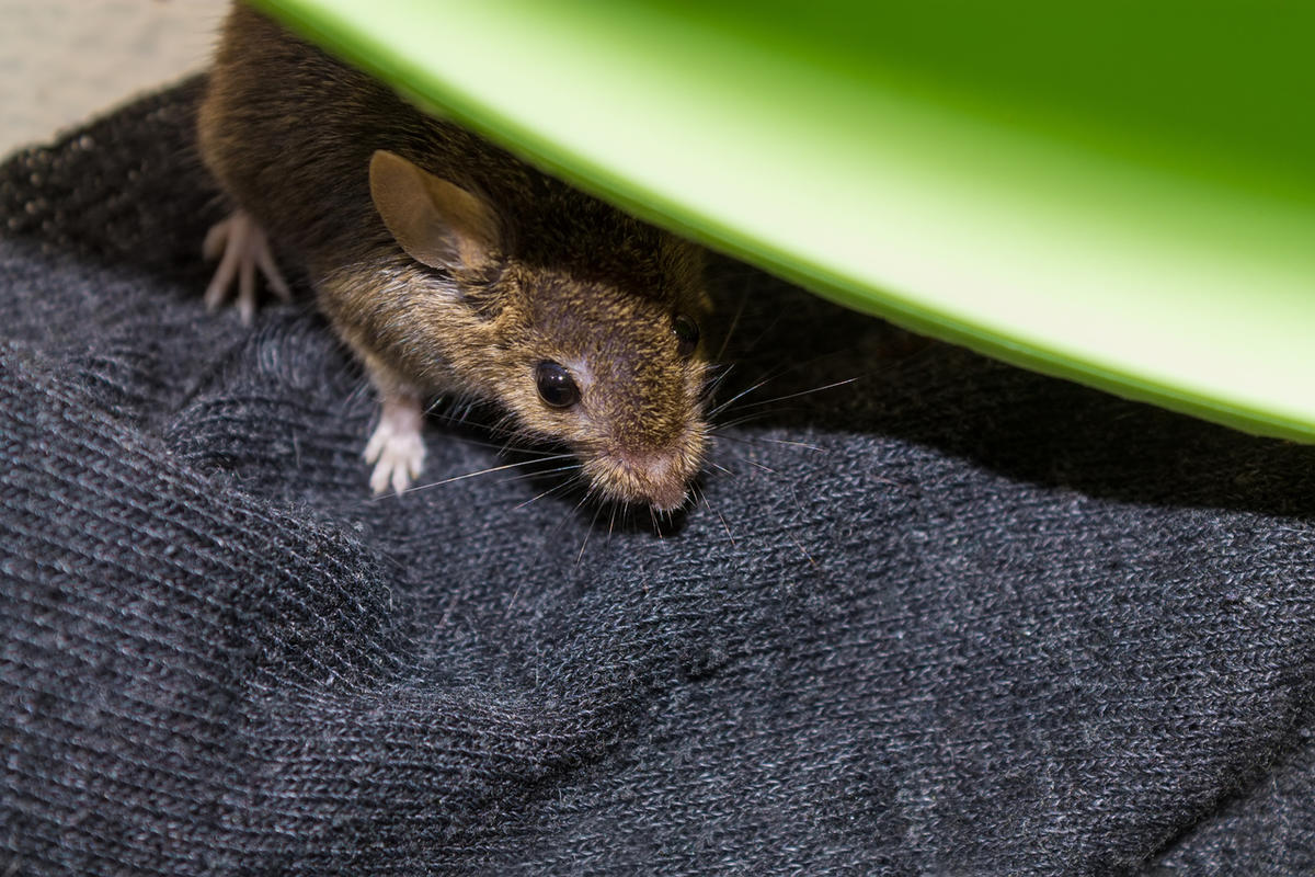After confronting a mouse in the closet on a recent afternoon, Amy Choate-Nielsen and her son were shaken to the core.