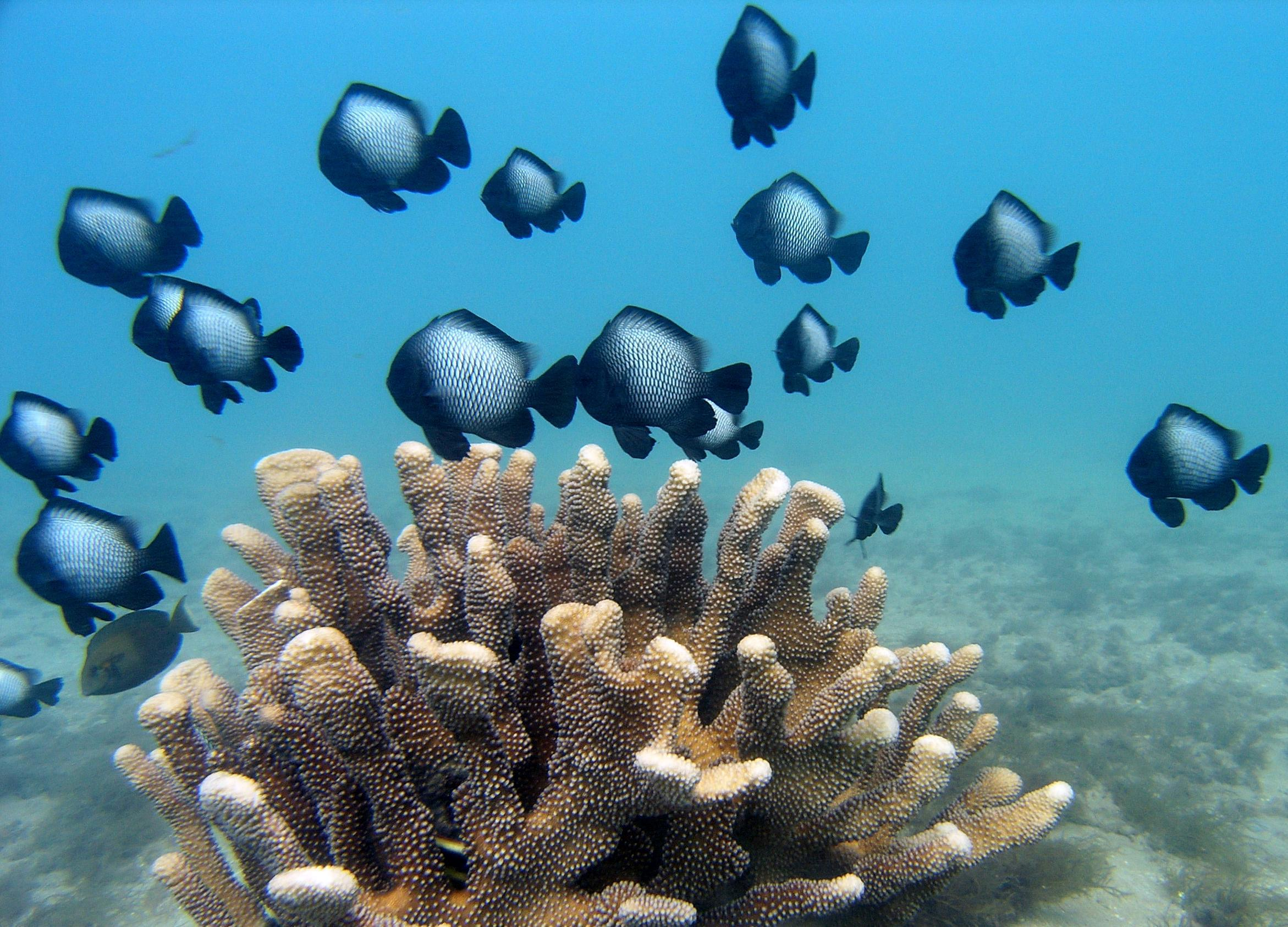 A coral reef is an oasis in an ocean. According to the National Oceanic and Atmospheric Association, coral reefs cover less than 1 percent of the ocean floor but house nearly a quarter of ocean life.