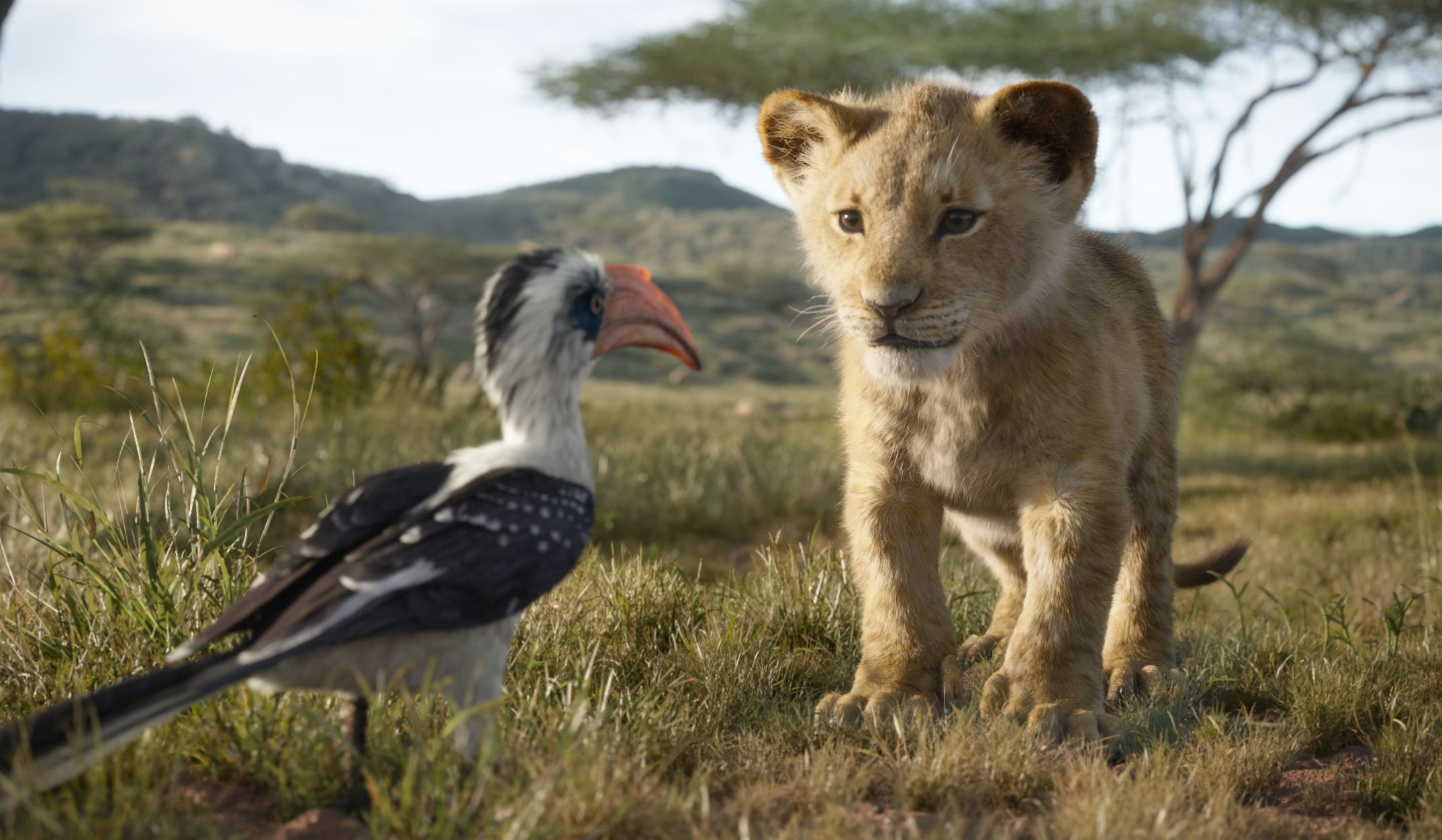 The Lion King 2019 remake - young Simba looking at Zazu on the savanna