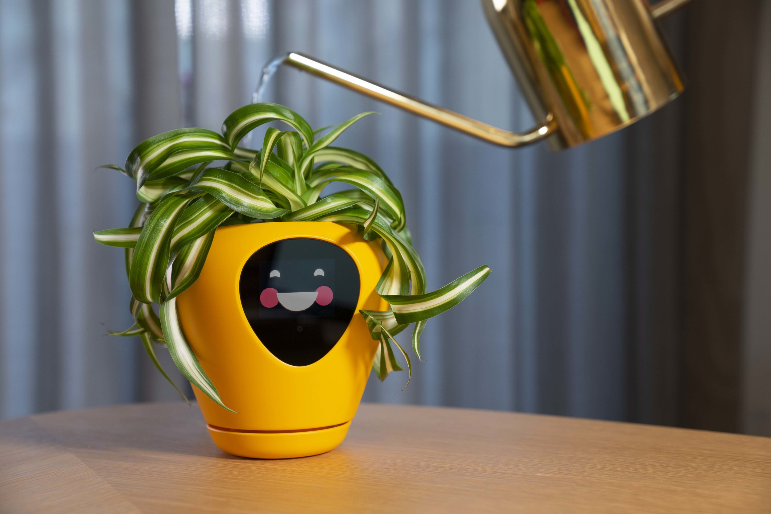 Smart planter has a screen that displays your plant's 'feelings'