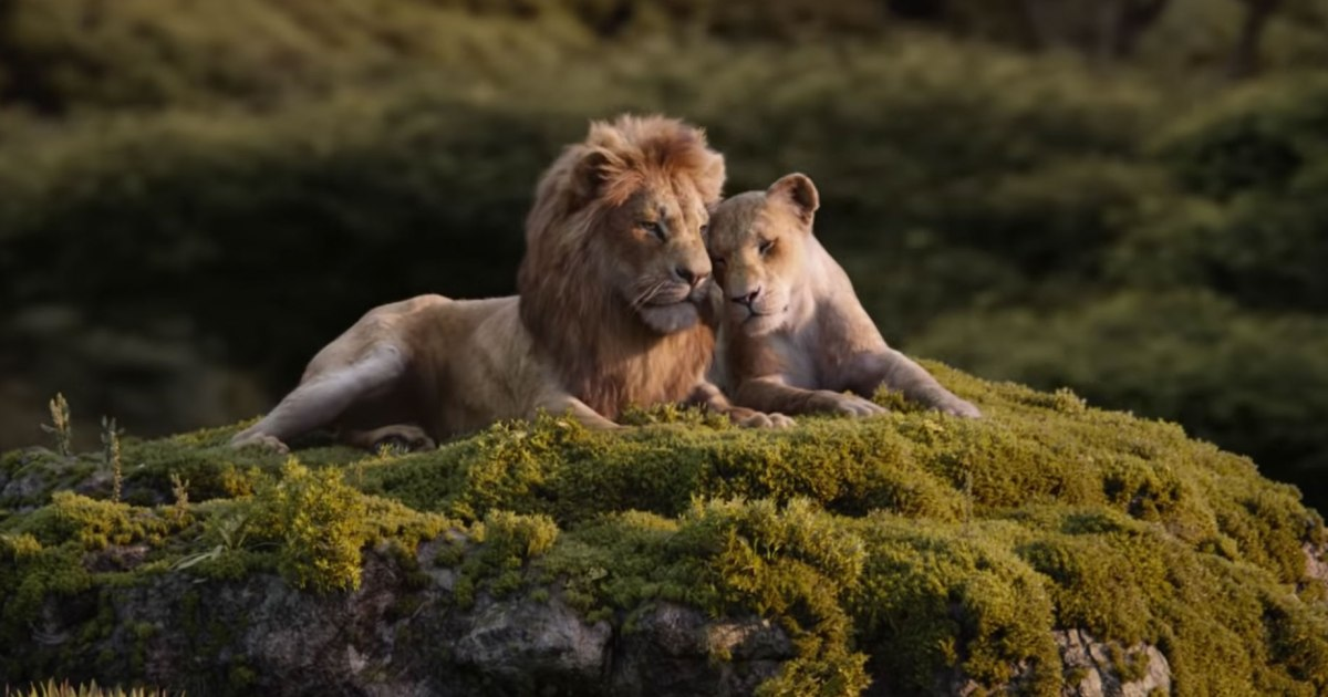 Are Simba and Nala related? A lion expert weighs in