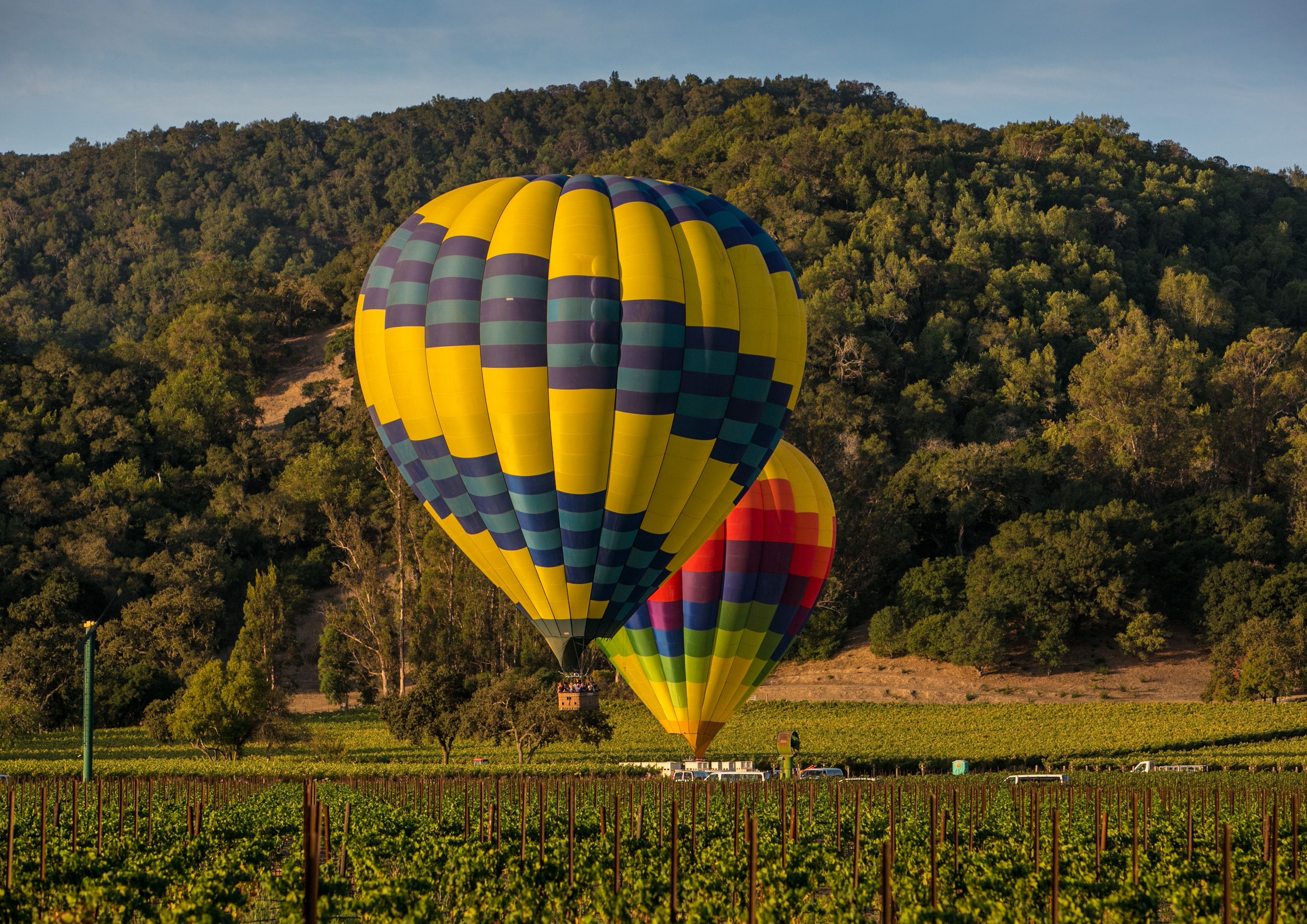 Colorful hot air balloons landing on the ground in the middle of a green vineyard