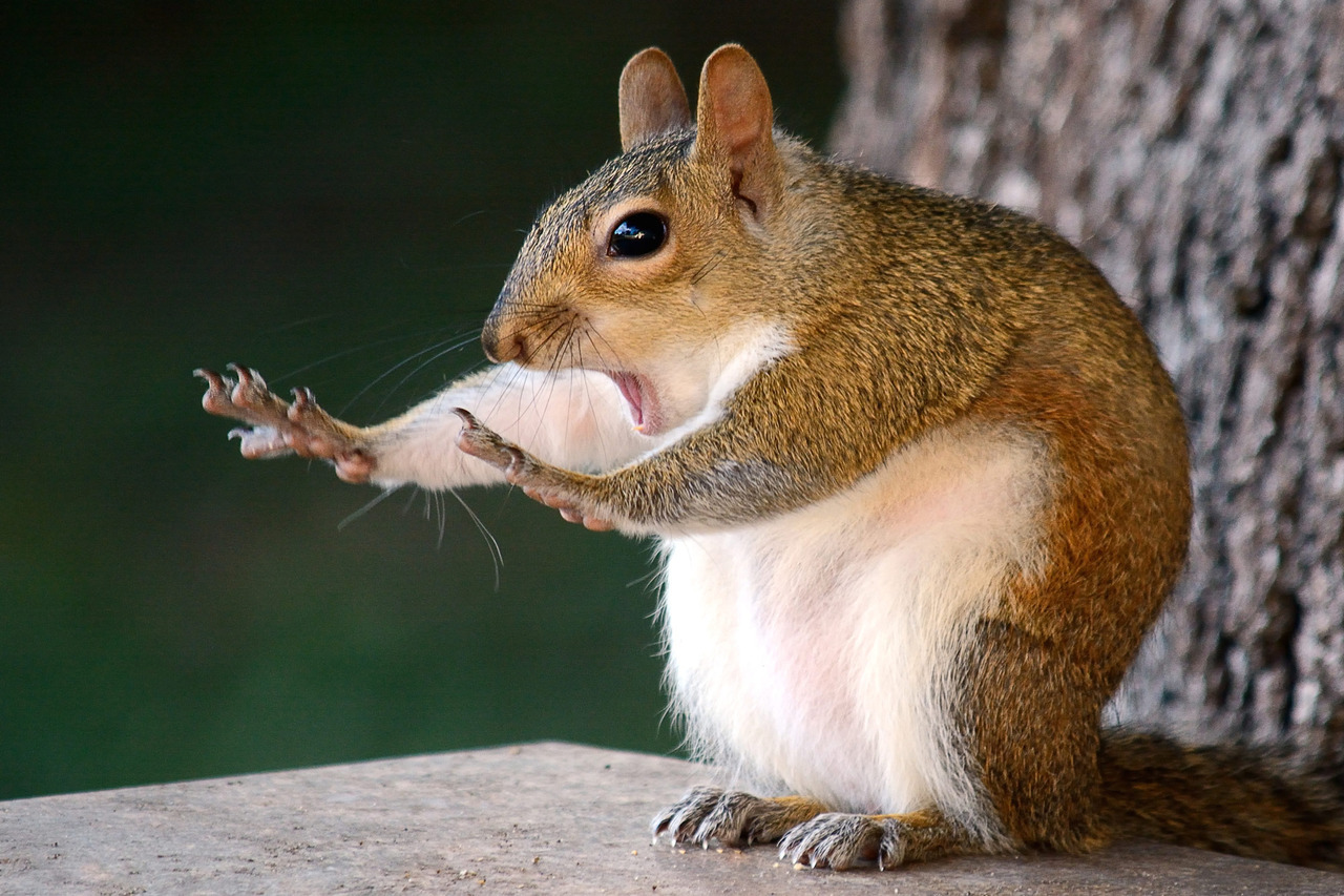 Man Who Ate Raw Squirrel at Vegan Food Festival Is Behind Alt-Right YouTube Channel
