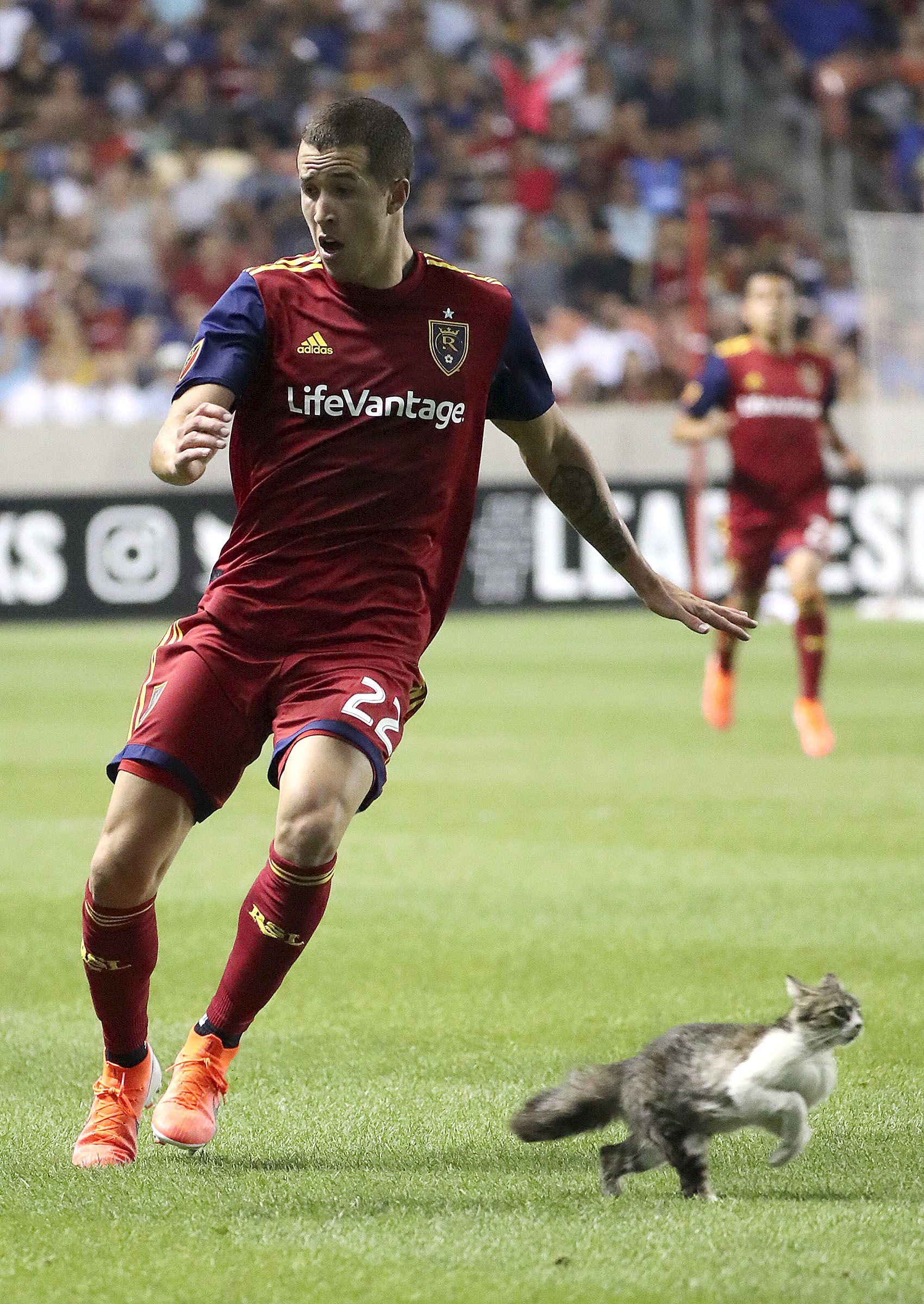 A cat runs past Real Salt Lake defender Aaron Herrera (22) during the last minutes of a Leagues Cup soccer match against the UANL Tigres at Rio Tinto Stadium in Sandy on Wednesday, July 24, 2019. Real Salt Lake lost 0-1.