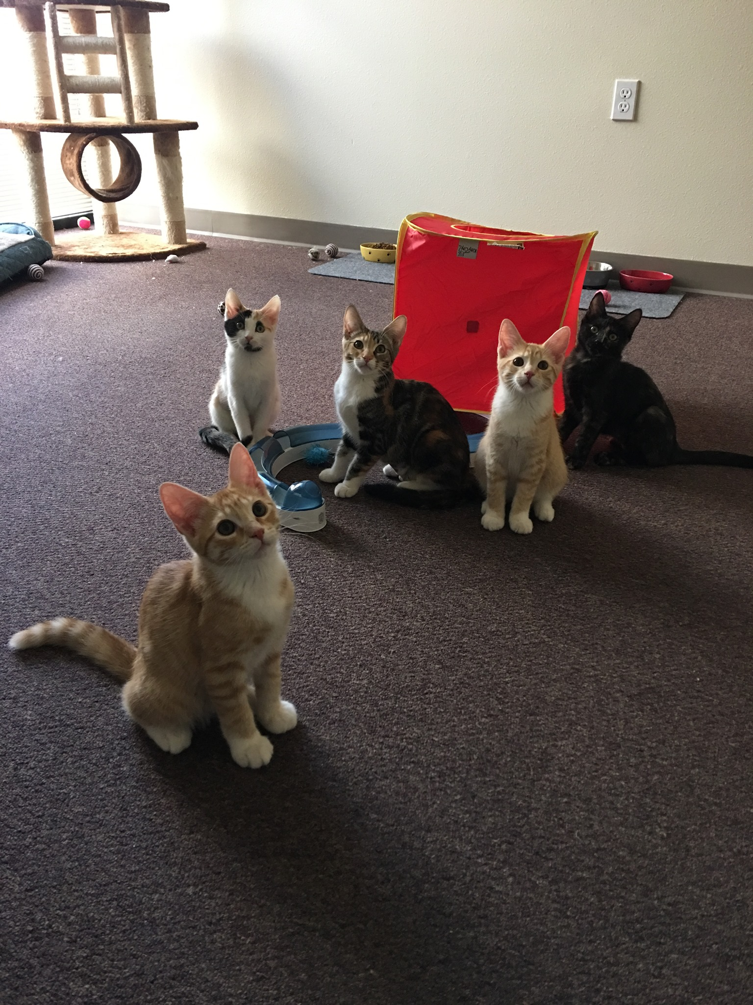 Las Vegas Lands Its Very First Cat Cafe