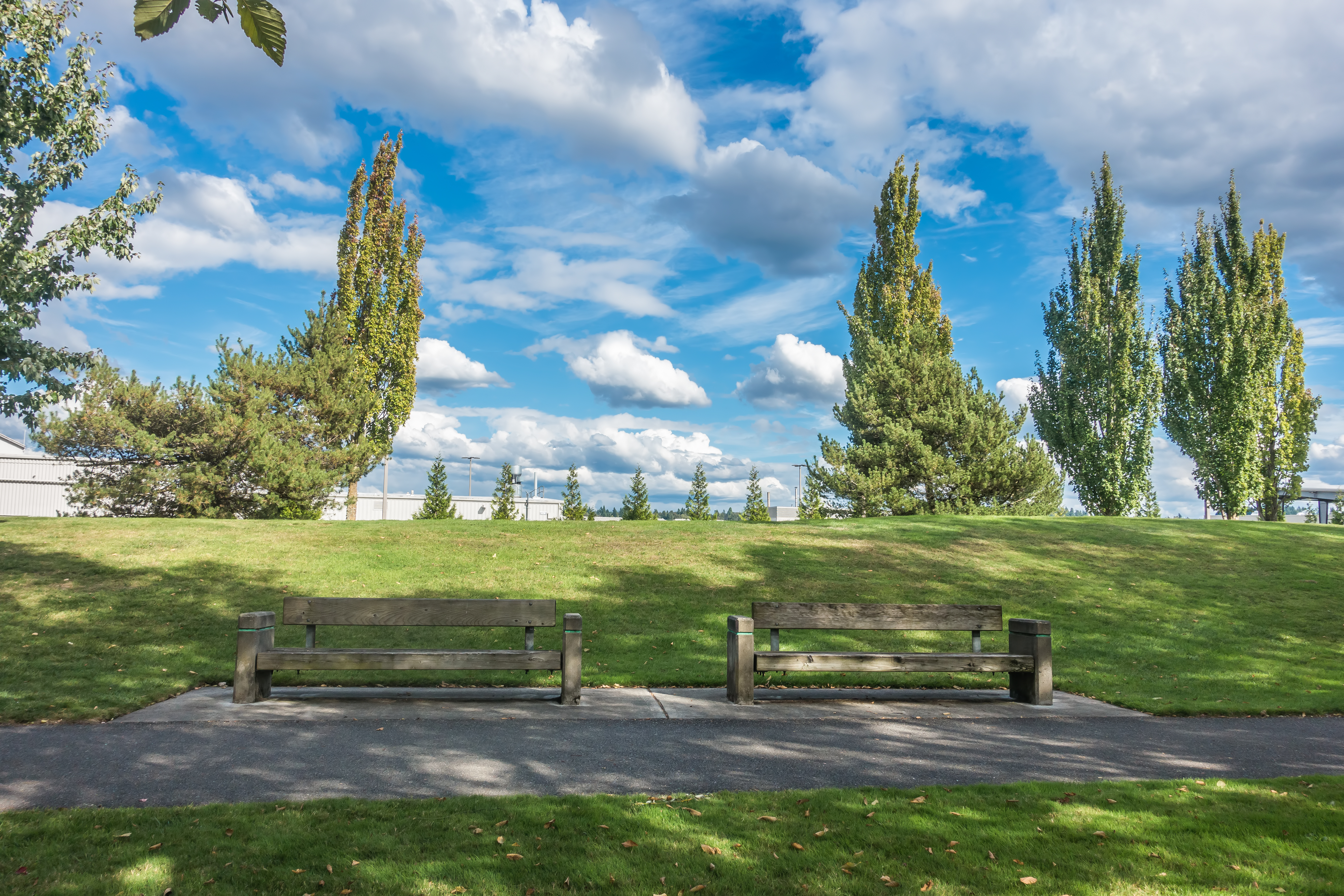 A bench along a paved trail, with a grassy lawn and trees in the background.