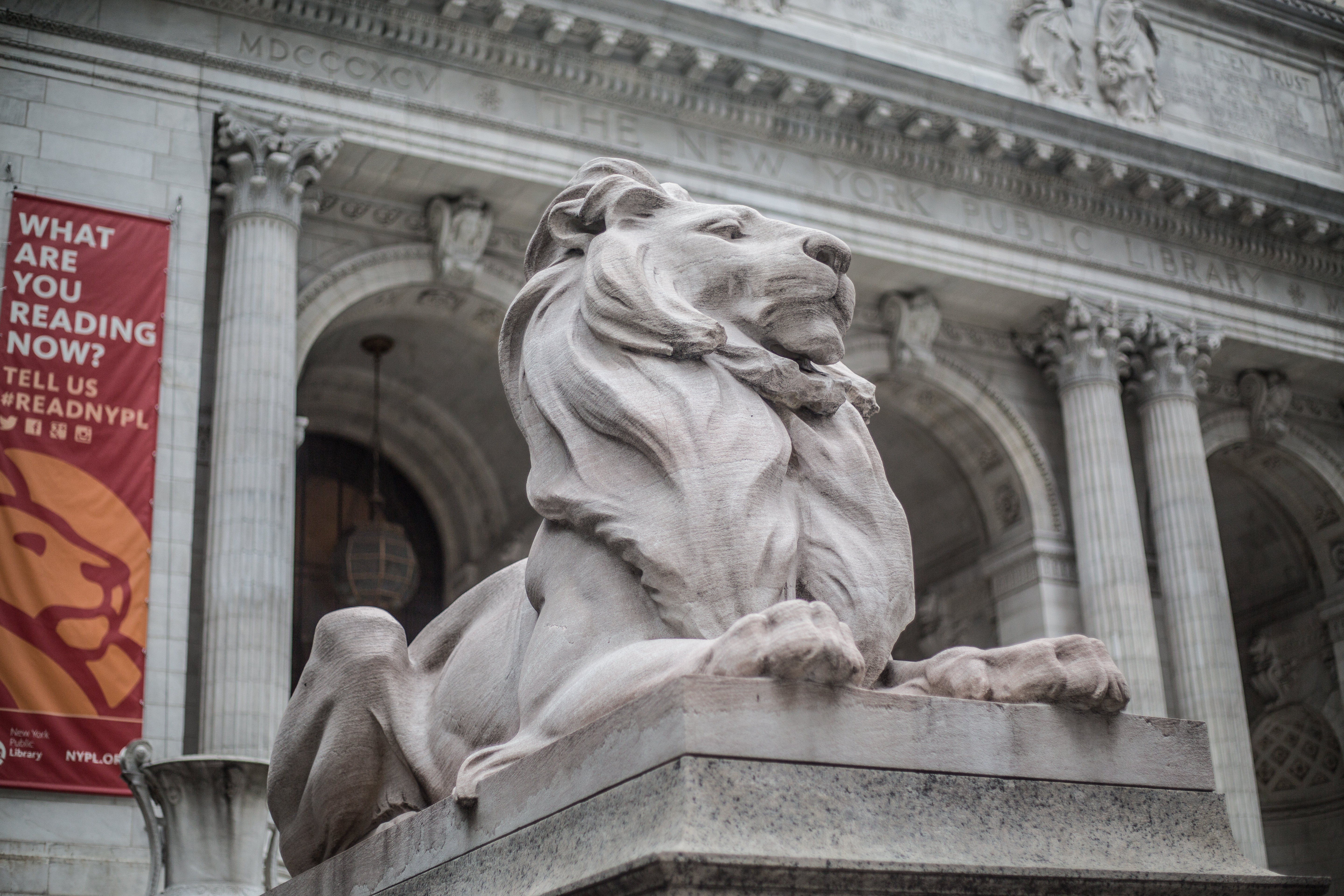 A lion sculpture carved out of stone in front of the New York Public Library building on Fifth Avenue and 42nd Street in Midtown, Manhattan.