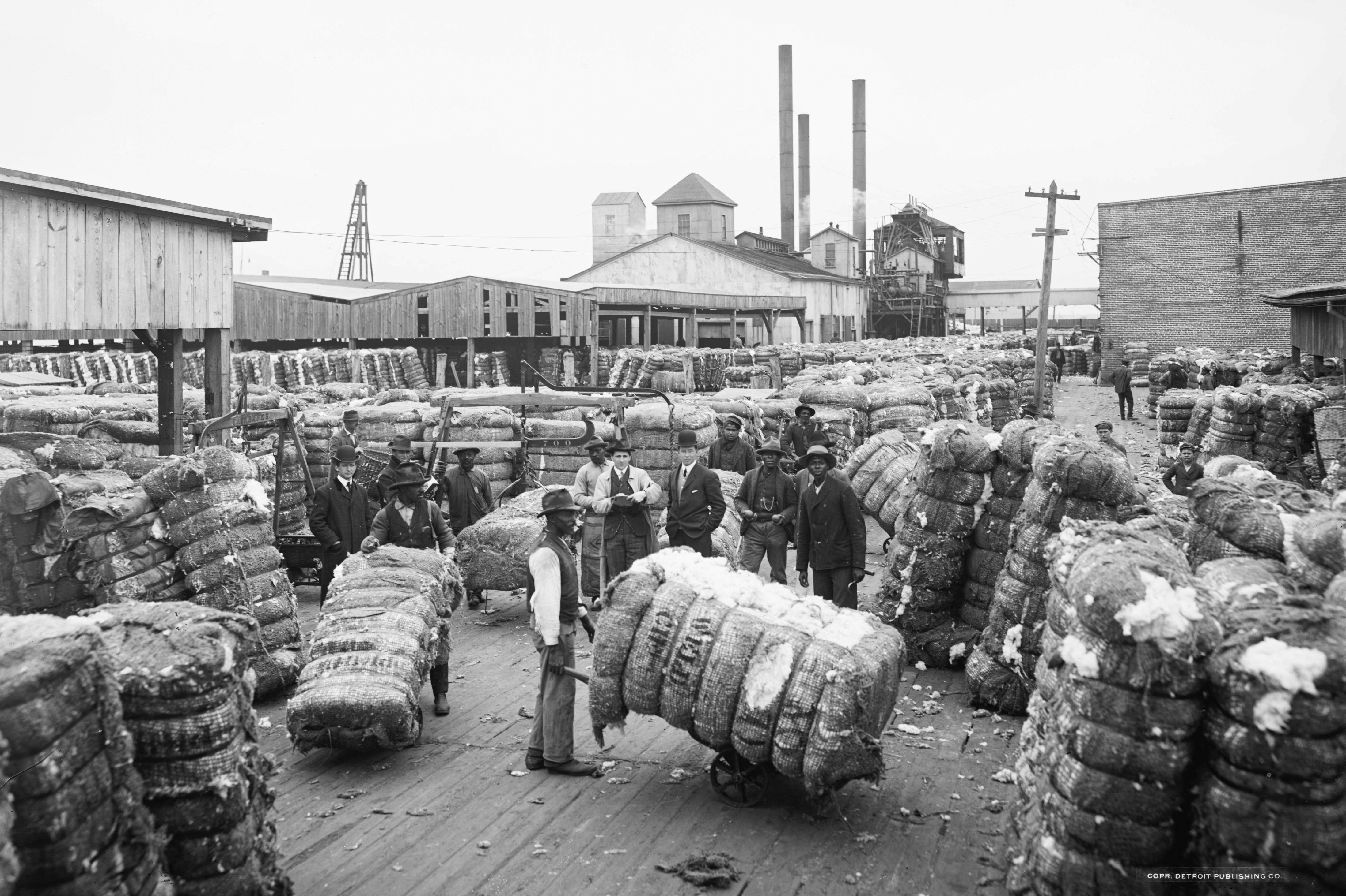 rise of the cotton industry 1793