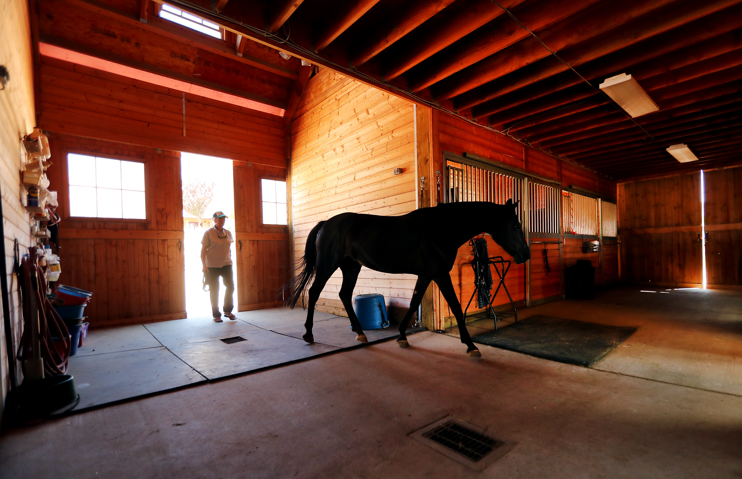 Bethann Martin puts a boarding horse into a stall in her barn in Sandy on Wednesday, Aug. 14, 2019. The Sandy City Council will vote Aug. 20 on a plan to rezone 4.5 acres of land into quarter-acre lots. The proposed rezone would also not allow farm animals in an area that has historically been equestrian friendly. Martin owns two acres of land about 11/2 miles northeast of the proposed rezone.