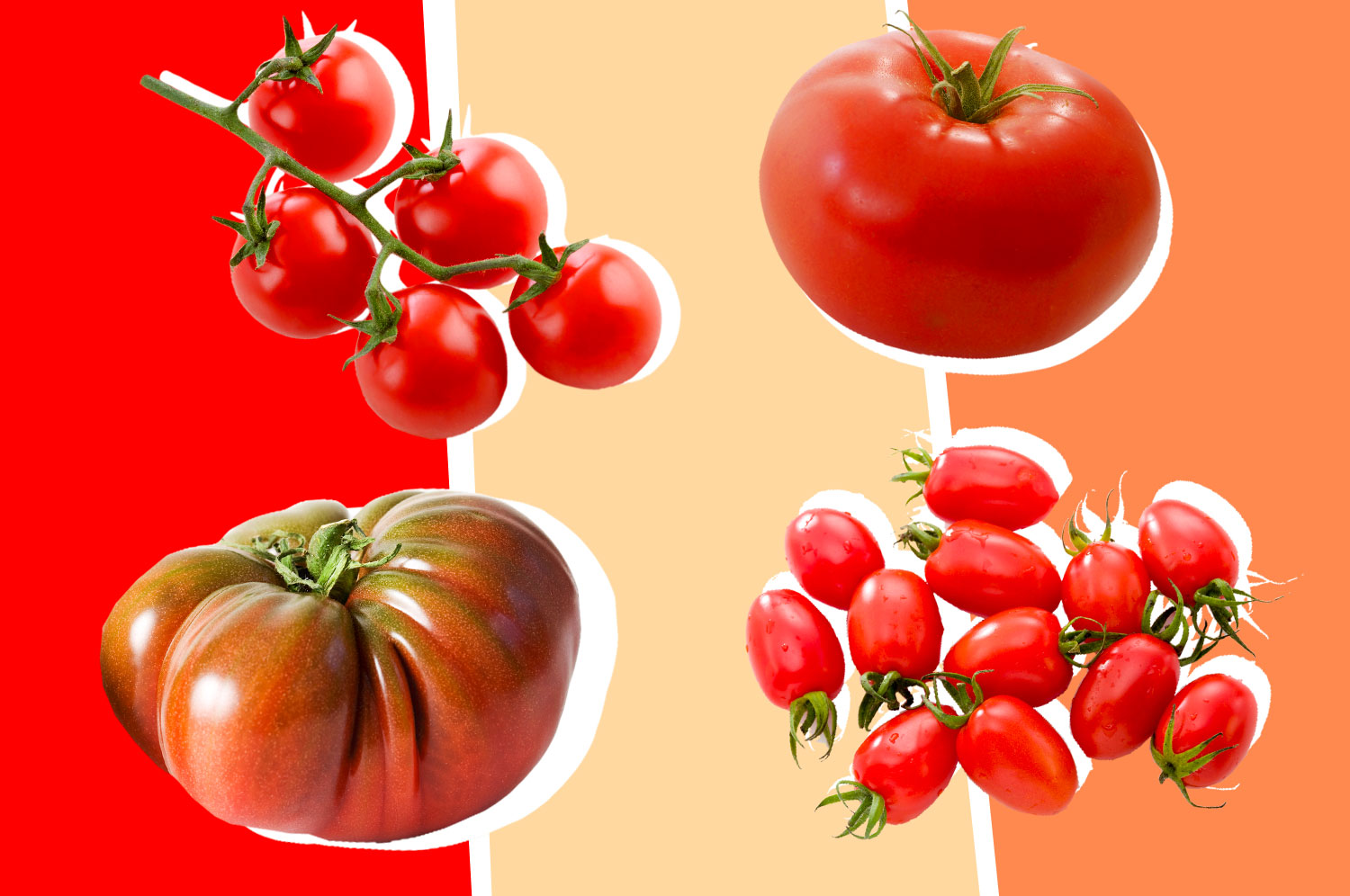 an heirloom tomato, cluster of cherry tomatoes on the vine, a beefsteak tomato, and a dozen plum tomatoes on a red, cream, and peach background