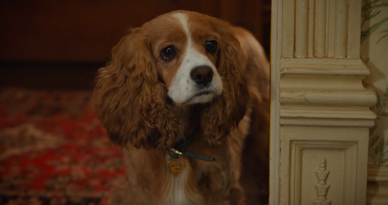 Live-action Lady in the new Lady and the Tramp movie whimpers and cries with big puppy dog eyes