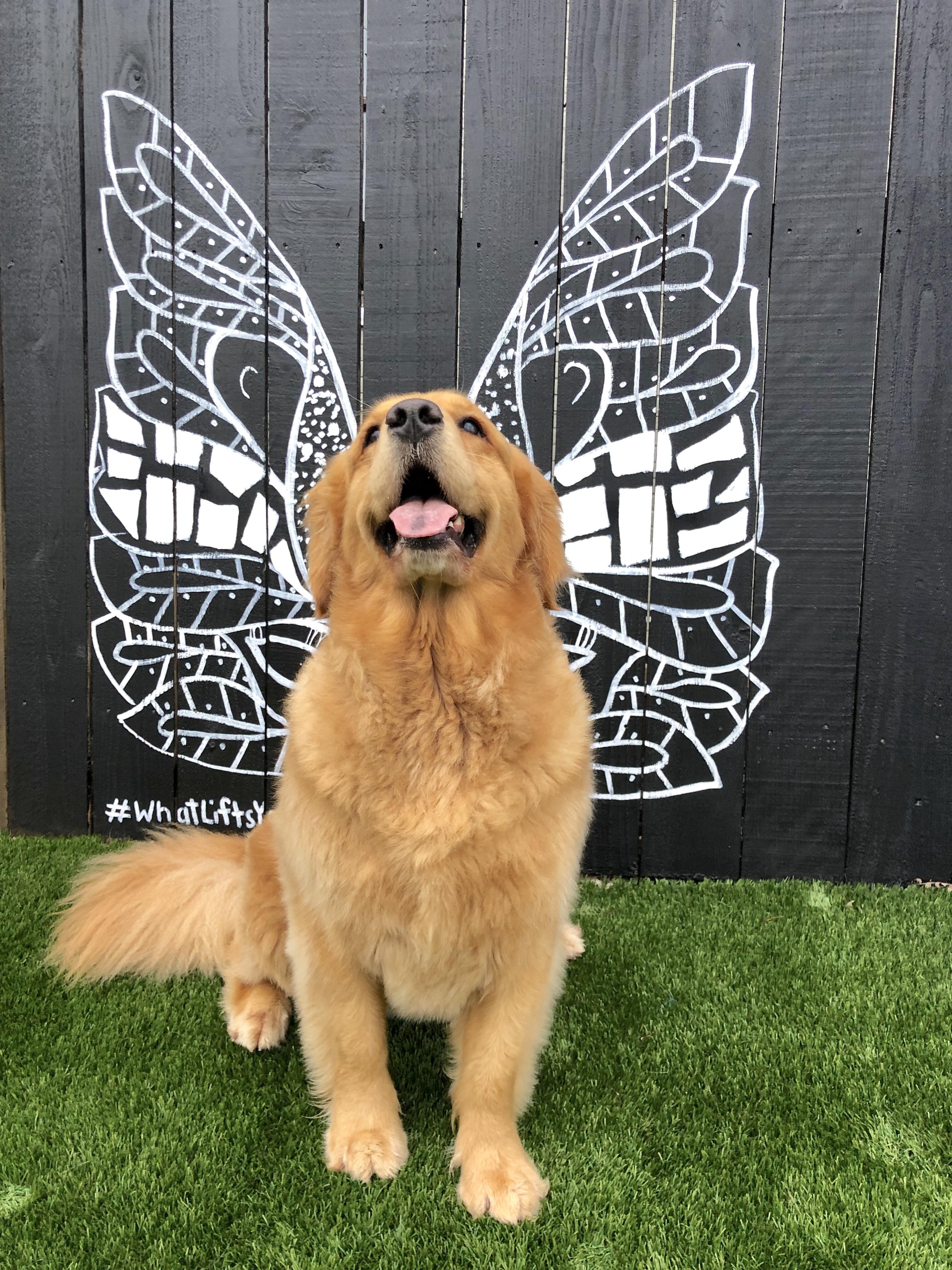 Dog in between Kelsey Montague's wings mural
