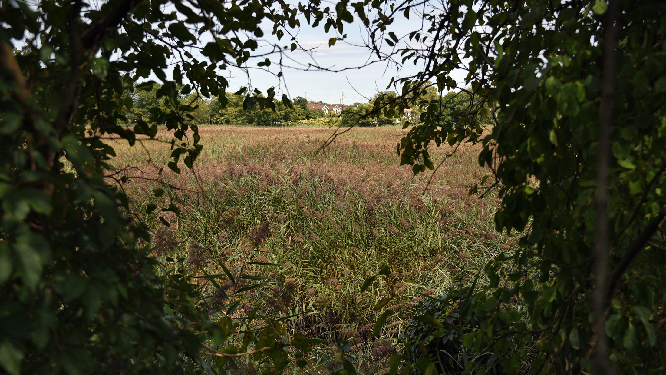 A field of grass and wildflowers viewed through tree branches.
