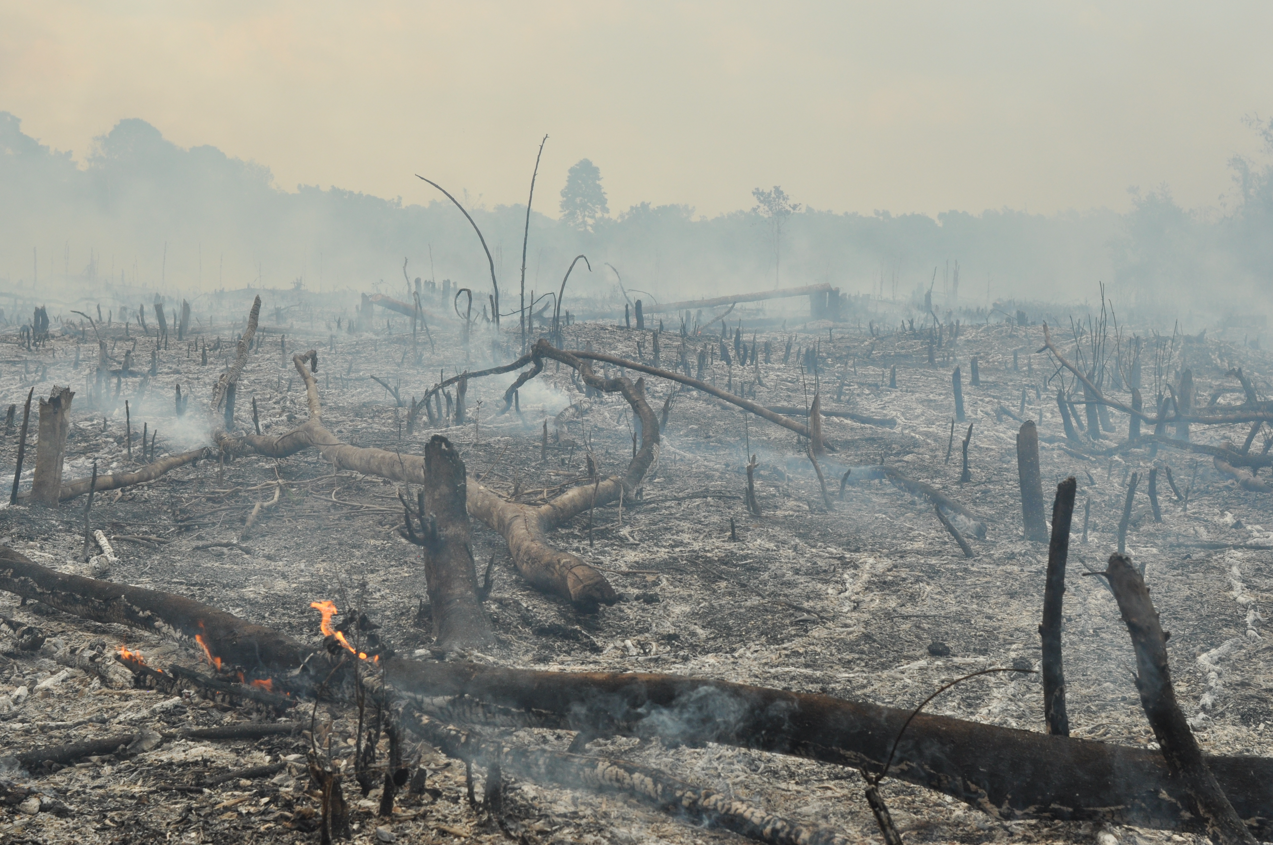 smoke rises from an area littered with charred logs into a hazy sky