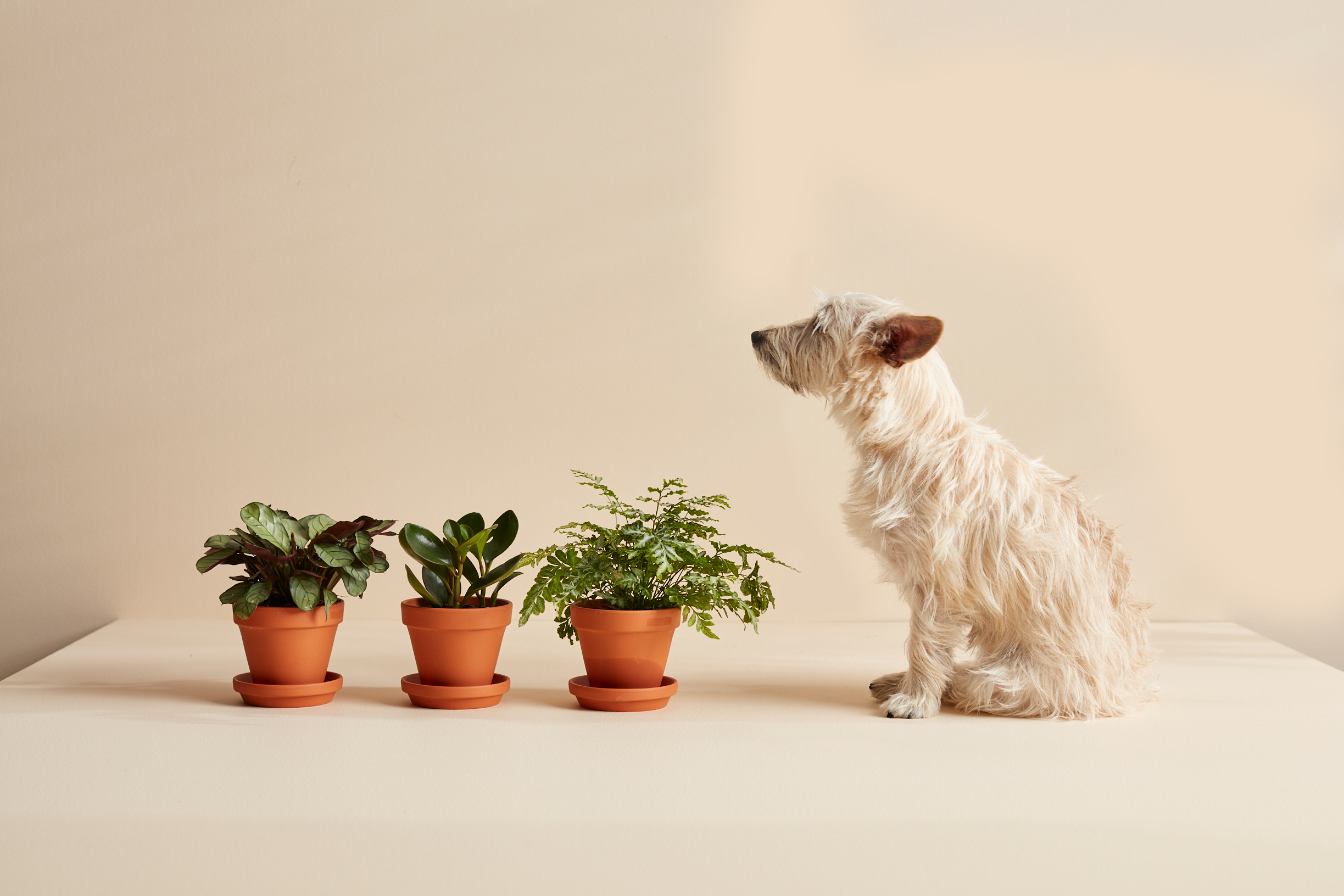 Dog sitting next to three potted plants.