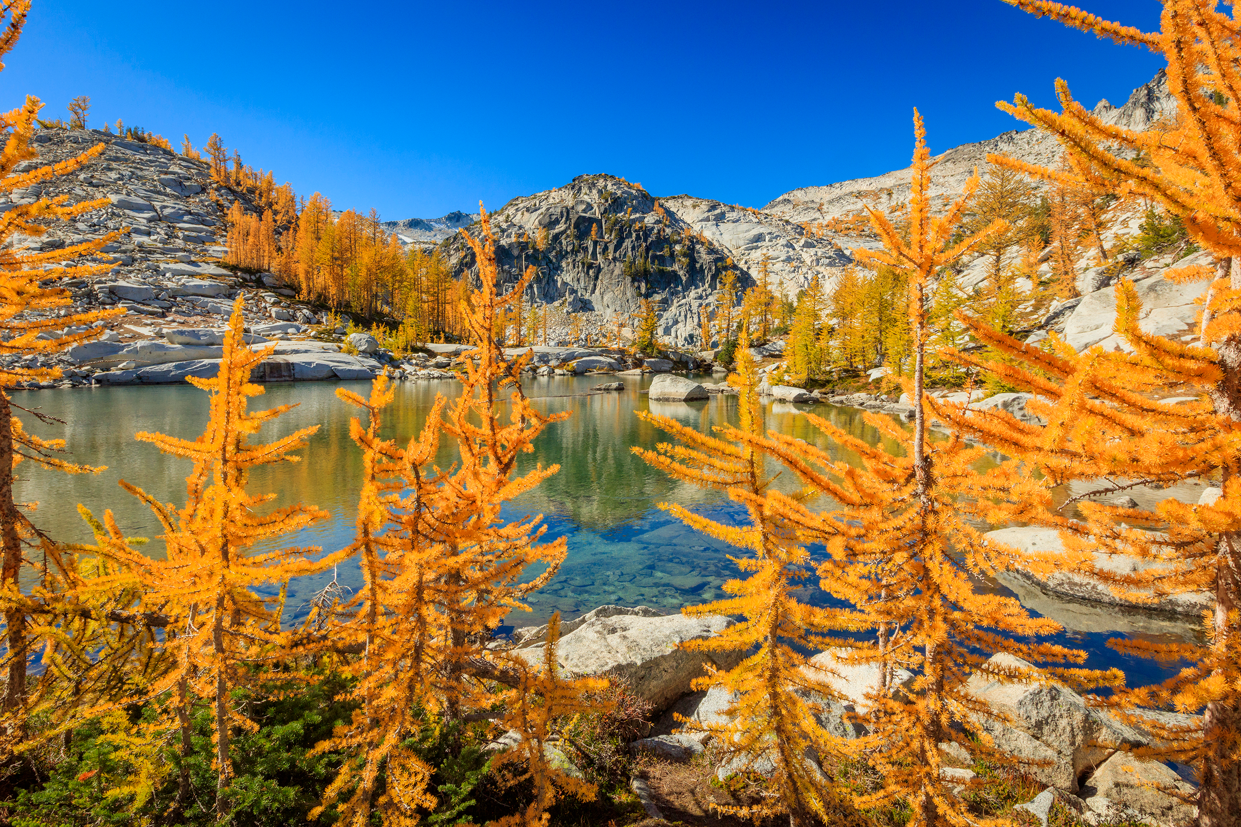 Bright-orange trees that look like conifers (but are not) surround an alpine lake surrounded by mountains on a clear, blue day.