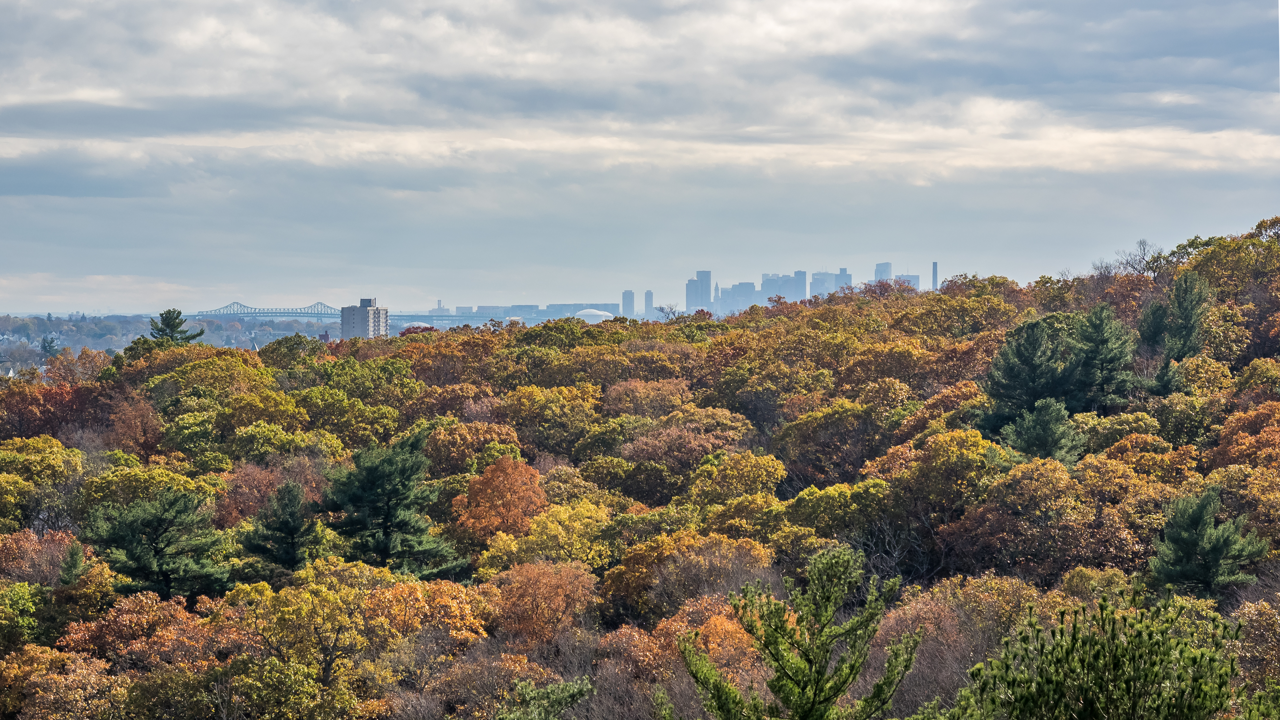 Multicolored trees clustered together in the foreground, with a city skyline in the background.