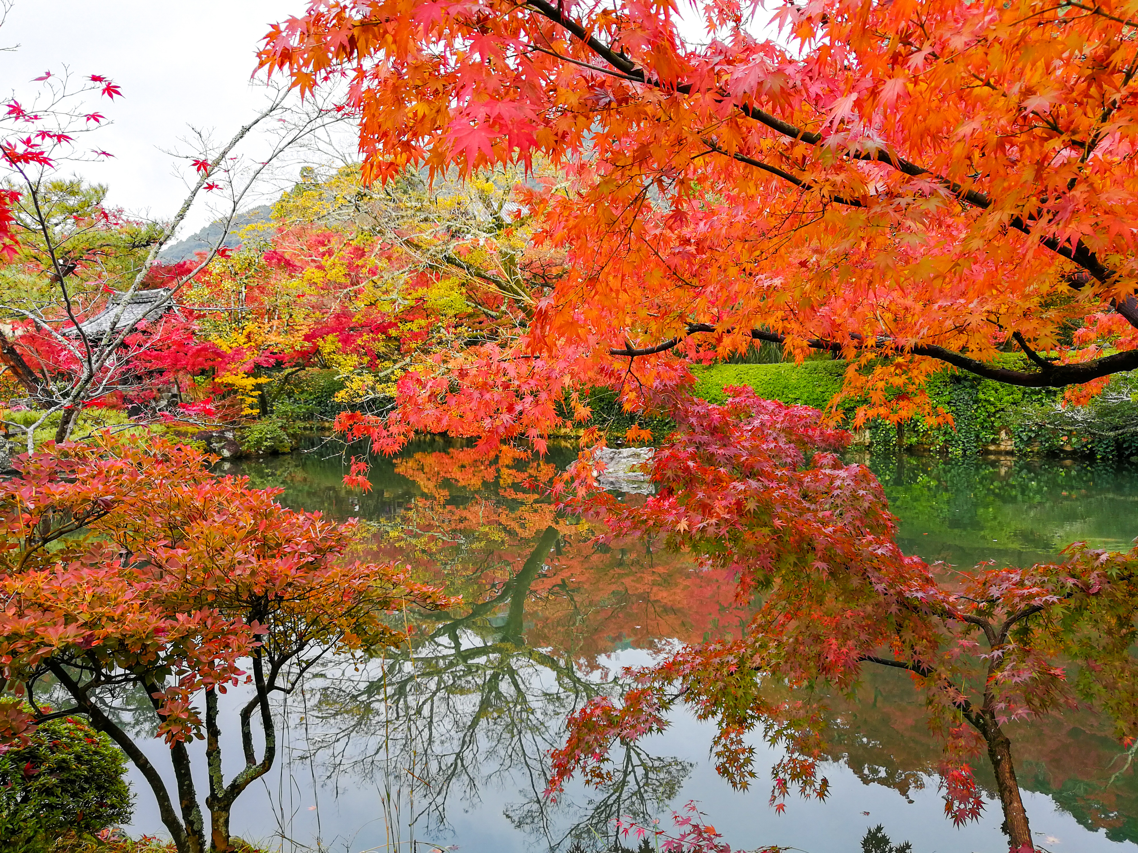 Bright orange maple trees stretch out over (and reflect in) a calm pond.