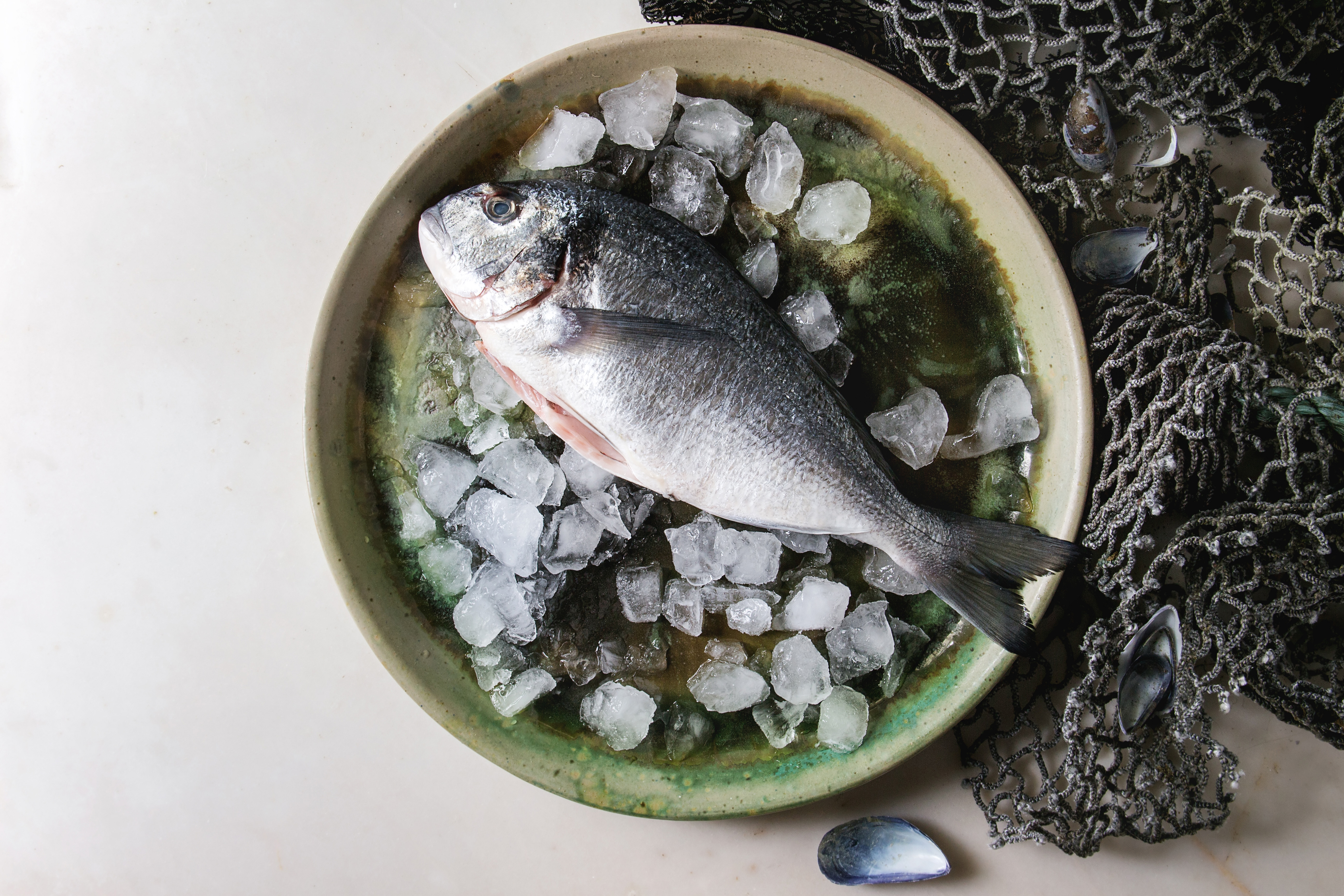 Raw uncooked gutted sea bream or dorado fish on ceramic plate with ice and old sea fishing nets and shells over white marble background. Flat lay. copy space. Cooking concept