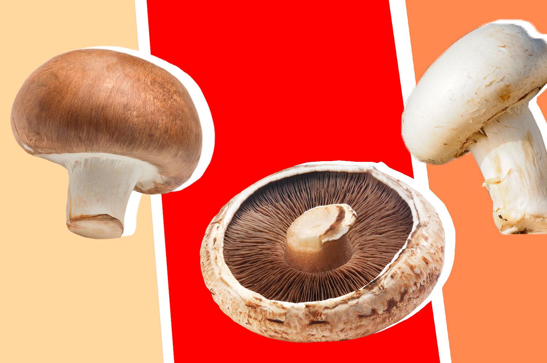 Three different kinds of mushrooms