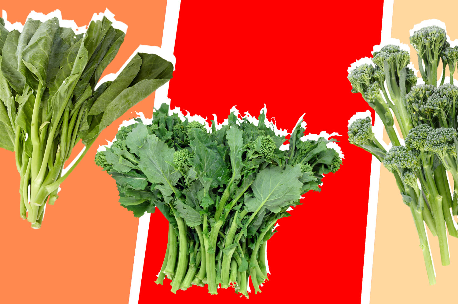 A collage of broccoli, broccolini, and Chinese broccoli