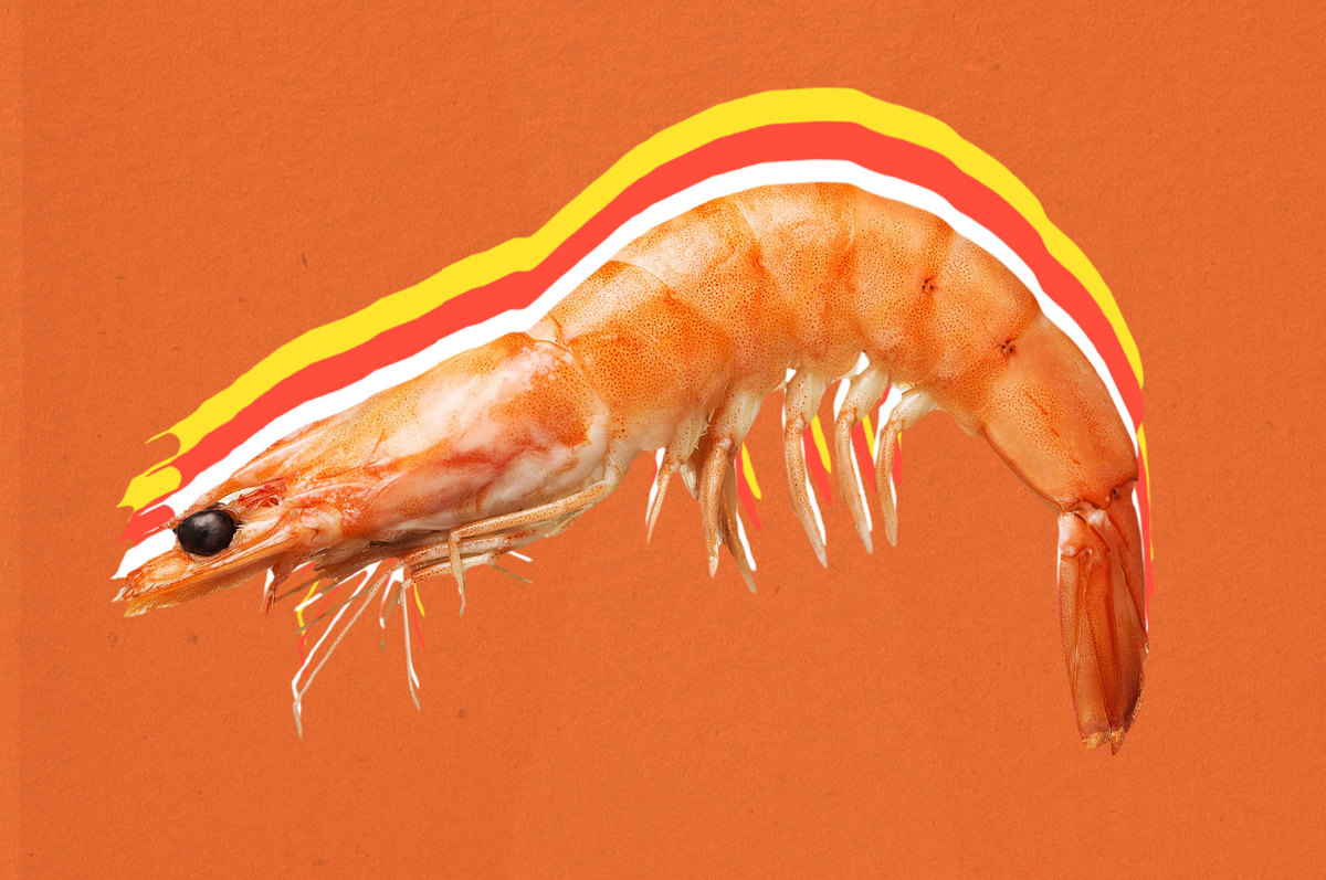 A shrimp on an orange backdrop