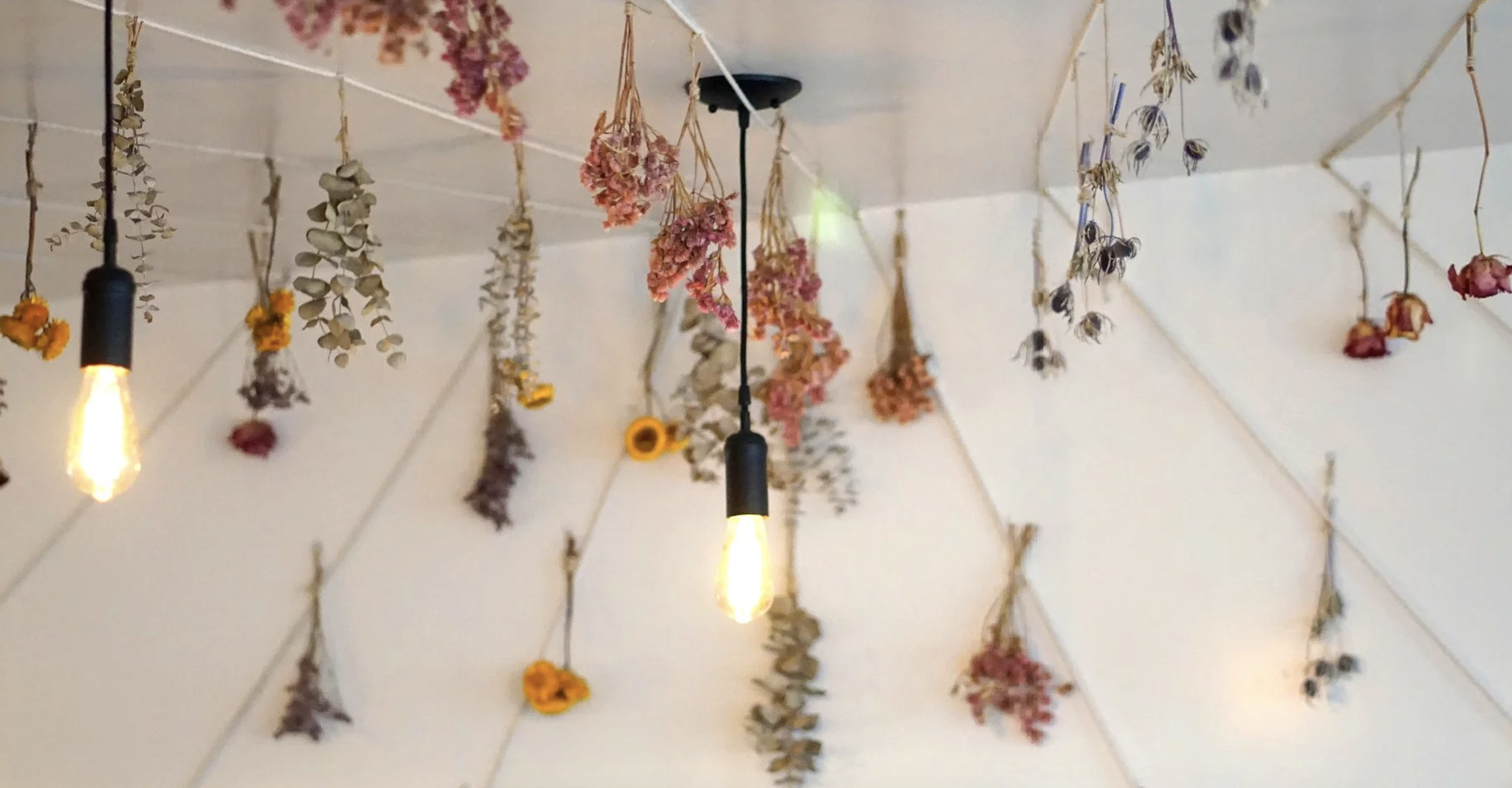Dried flowers and exposed bulbs hang as art inside of a restaurant.