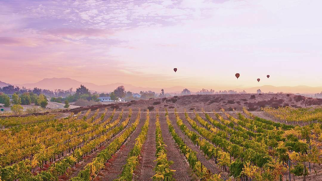 Where to Eat & Drink in Temecula Valley