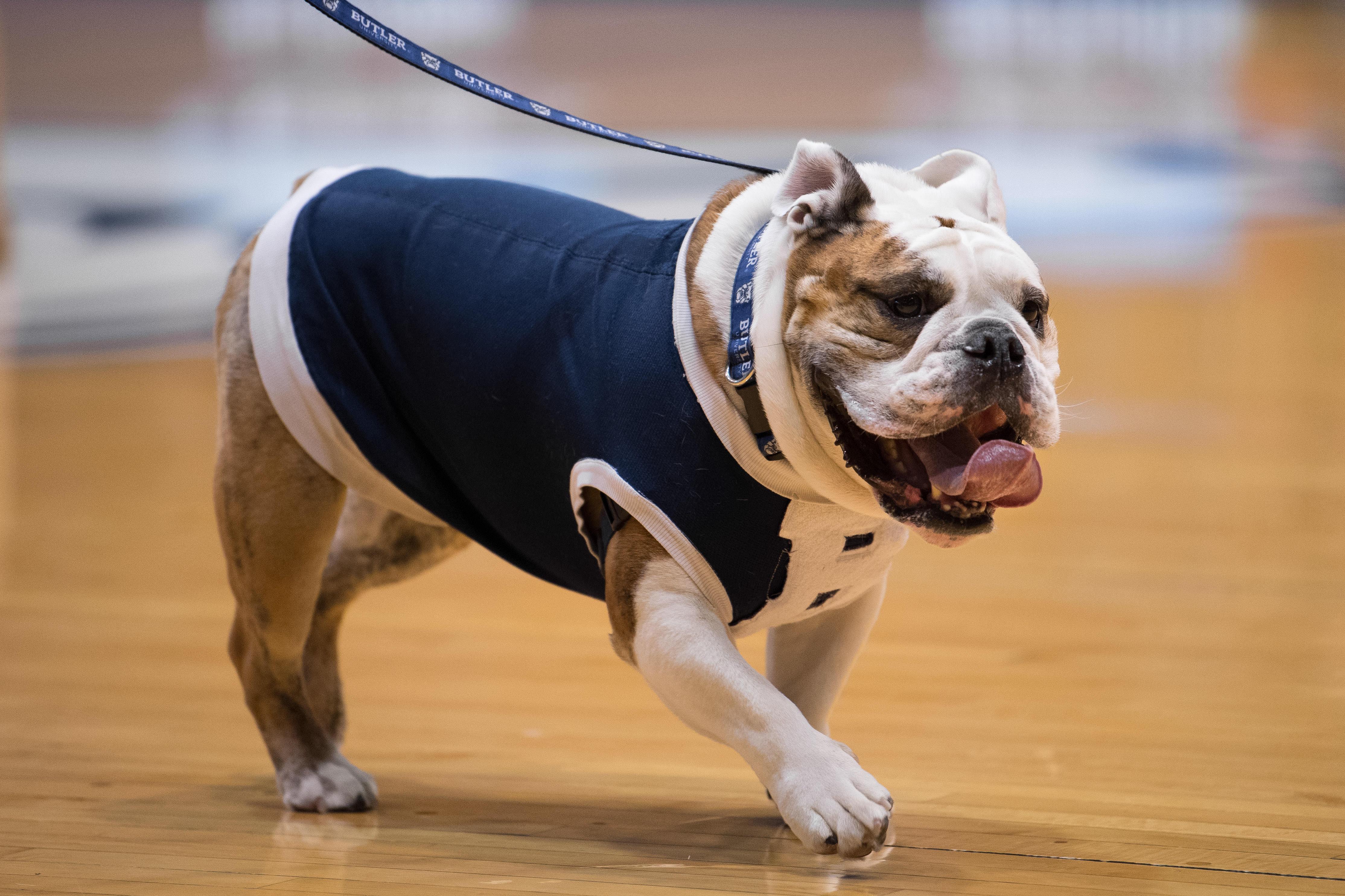 NCAA BASKETBALL: JAN 16 Marquette at Butler