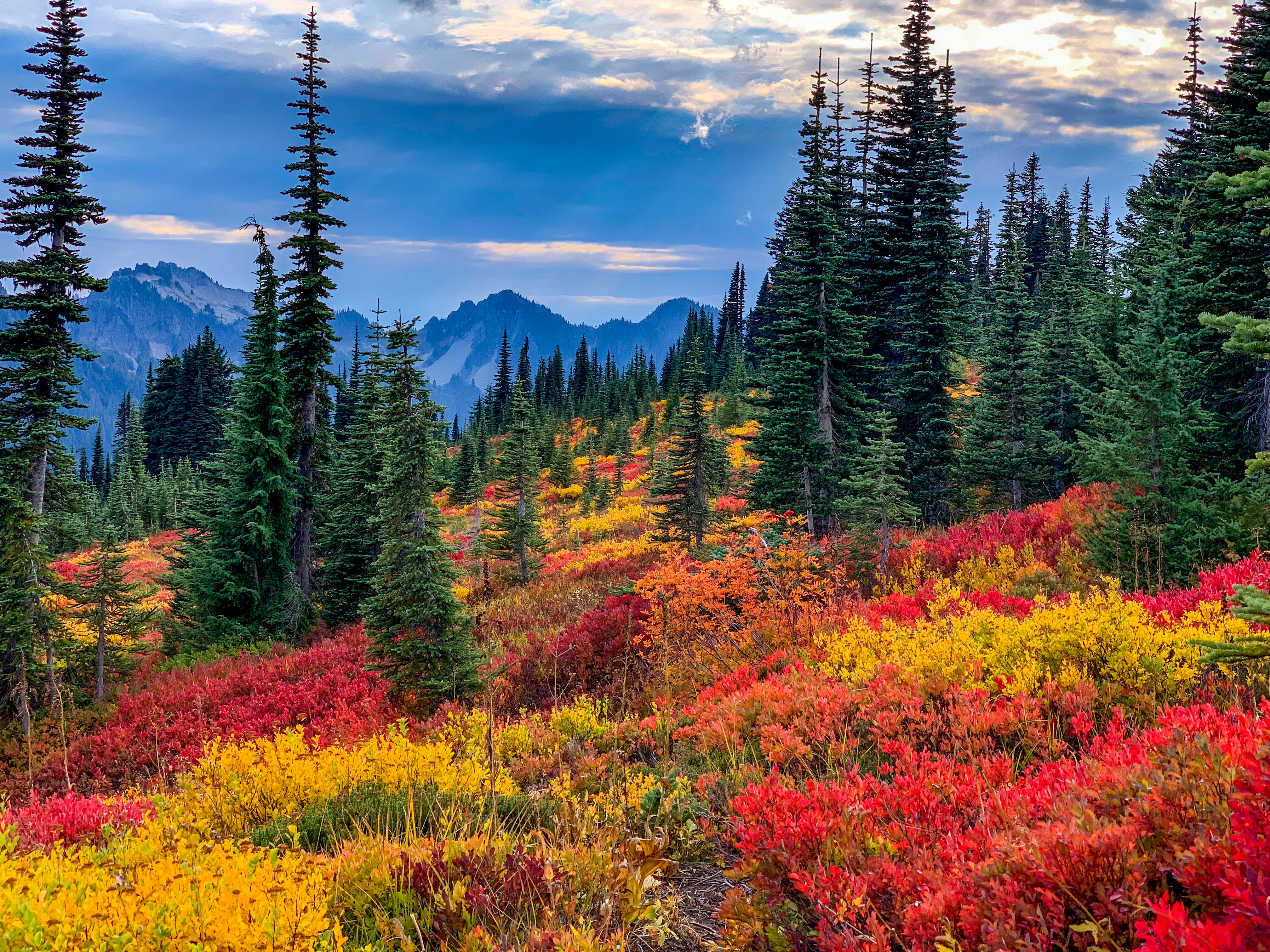 A blanket of low red, yellow, and orange brush is below evergreen trees, with mountains and cloudy skies in the background.