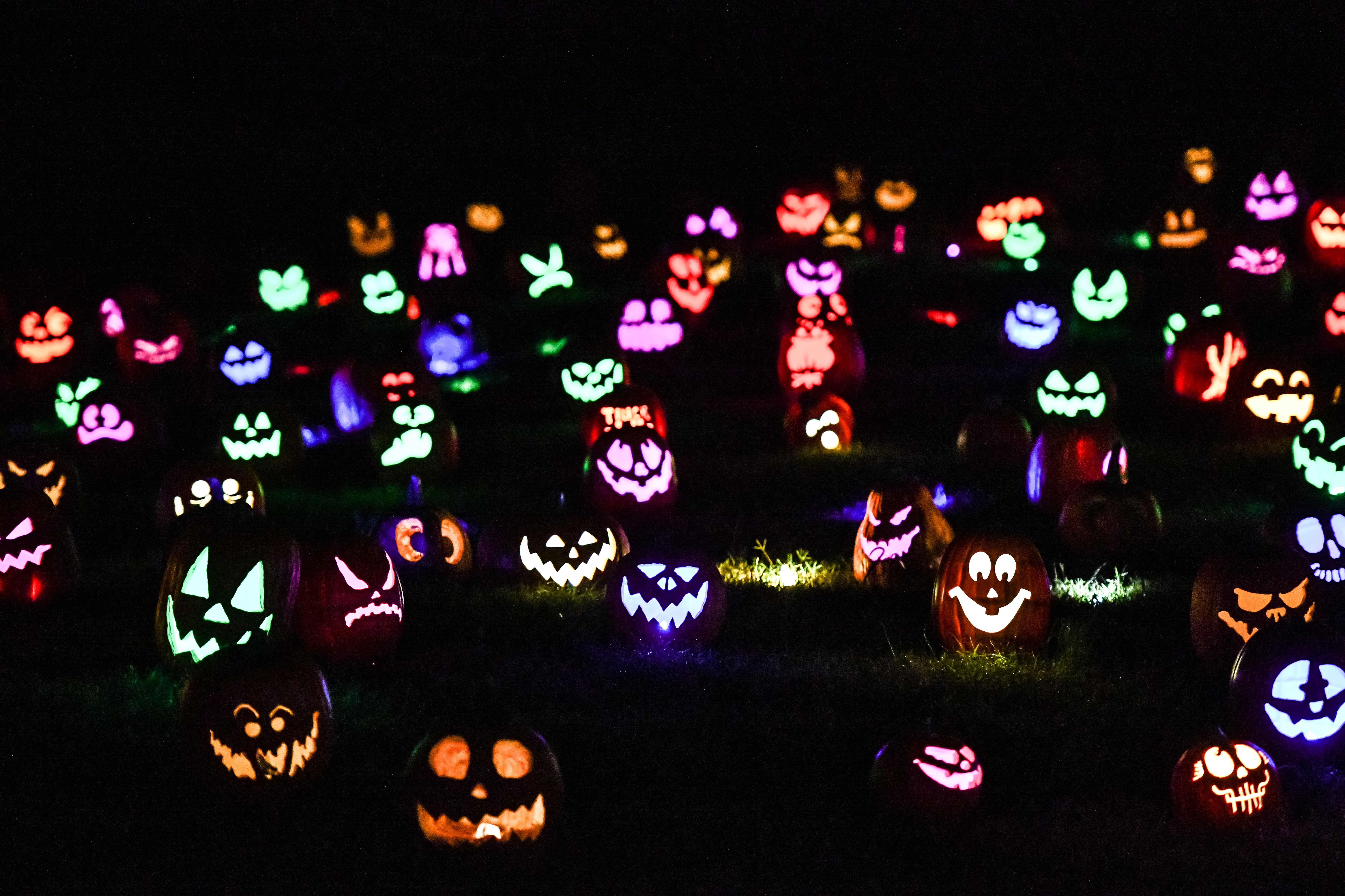 5,000 hand-carved pumpkins (done in real time),  life-sized sculptures and classic Halloween characters line the trail of the Sensory Garden park during Jack's Pumpkin Glow in Lisle.